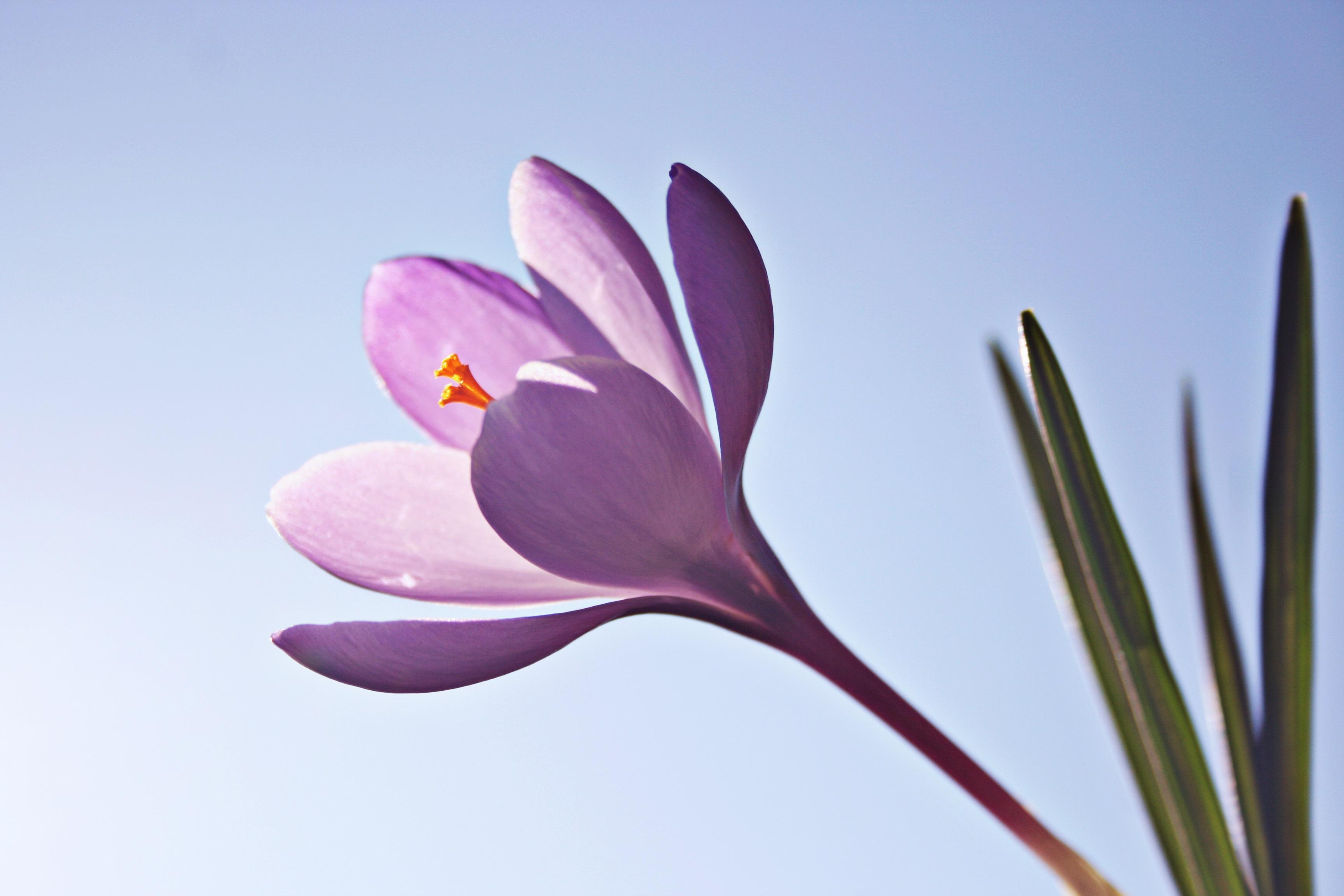 natureza flor plantar folha flor ptala flor primavera botnica jardim rosa flora flores fecharse