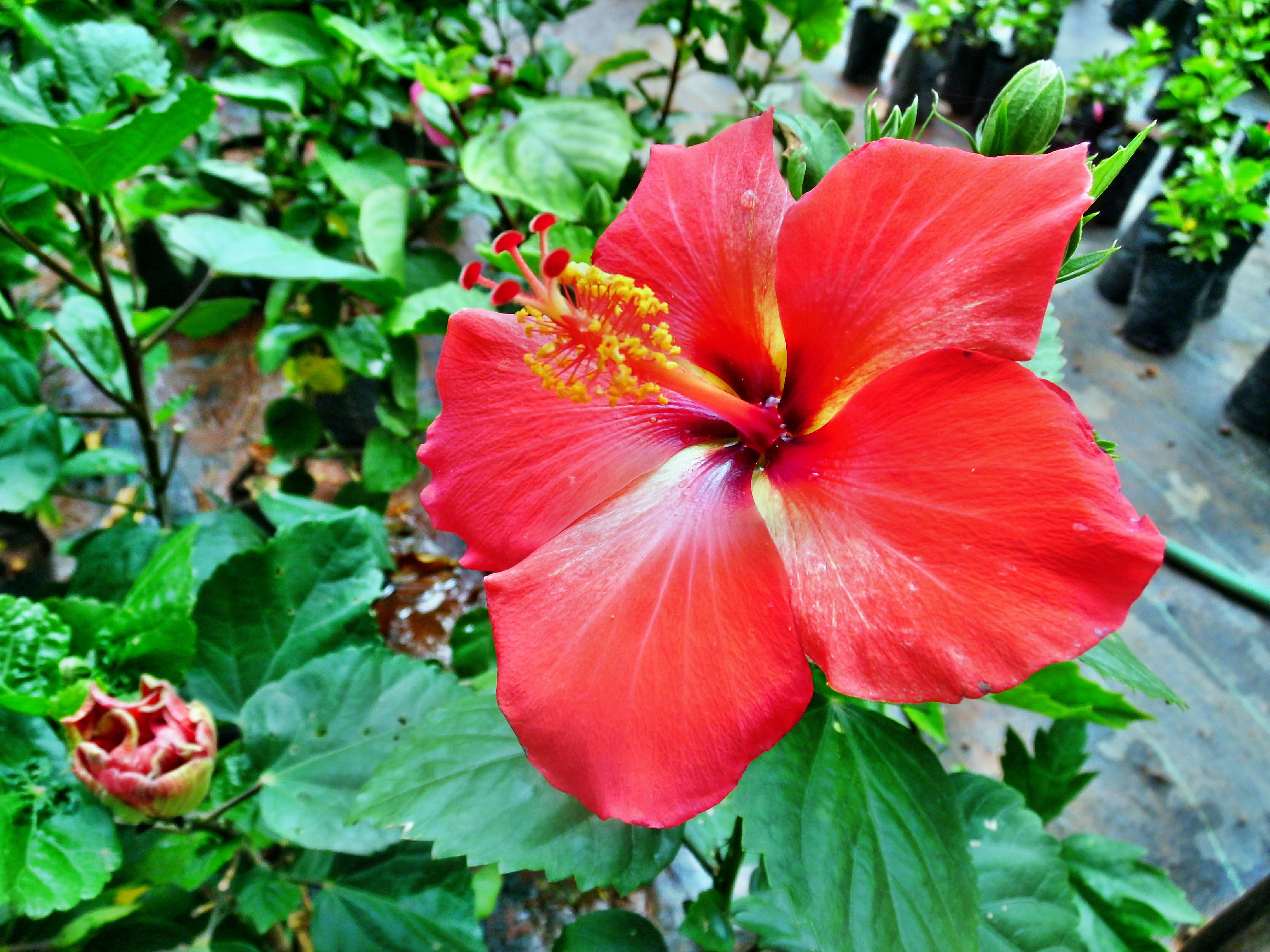 images gratuites : la nature, fleur, feuille, pétale, floraison