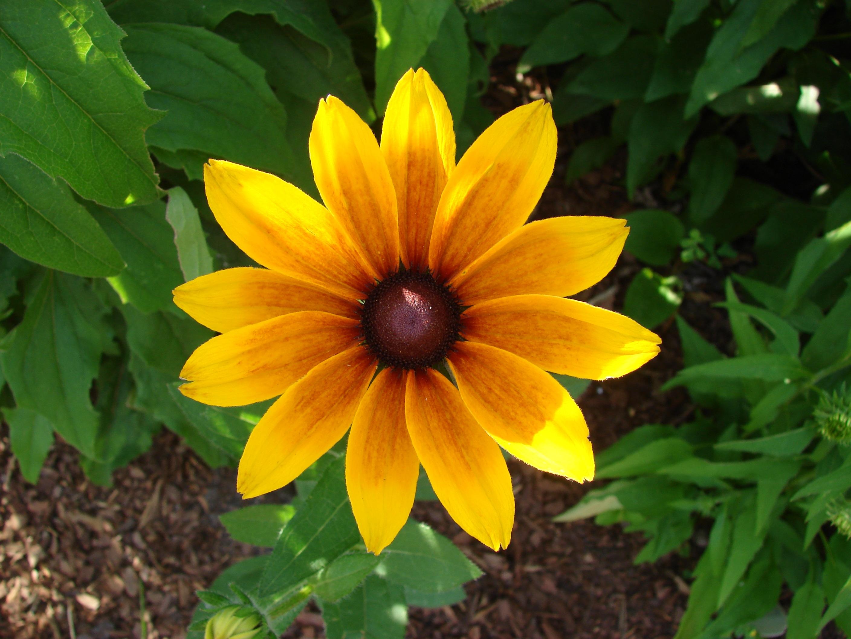 Images Gratuites : la nature, fleur, feuille, pétale, Floraison, été ...