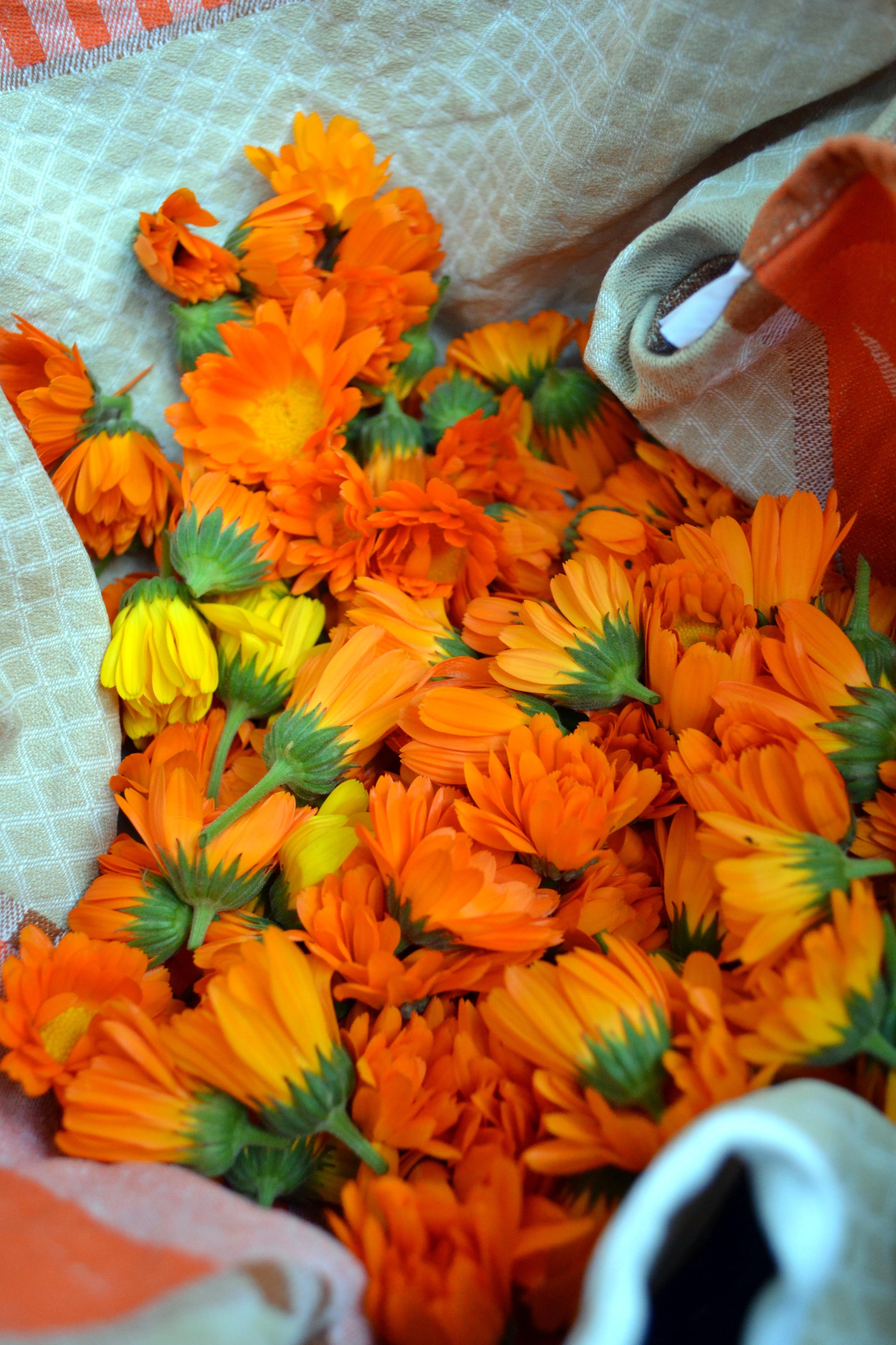Fotos Gratis Naturaleza Hoja Petalo Florecer Naranja Color