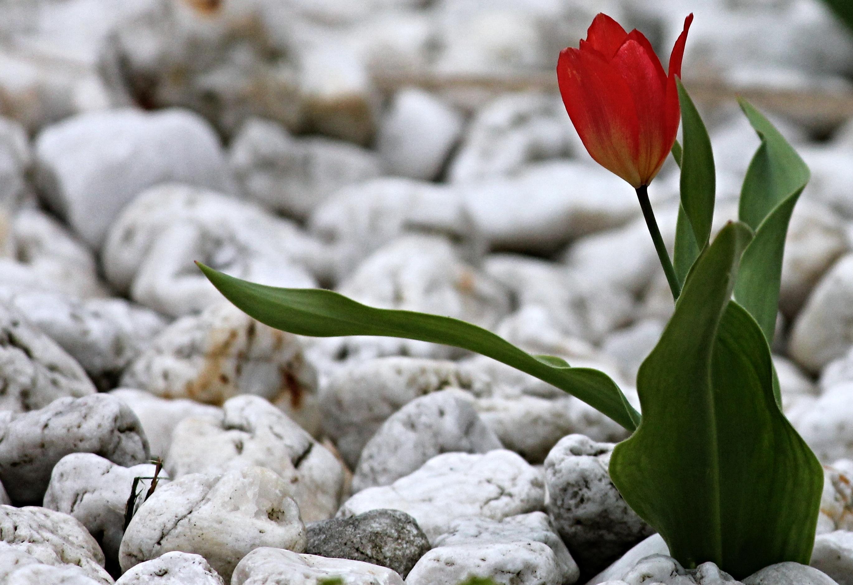 Gratis afbeeldingen : natuur bloesem fabriek blad bloemblad