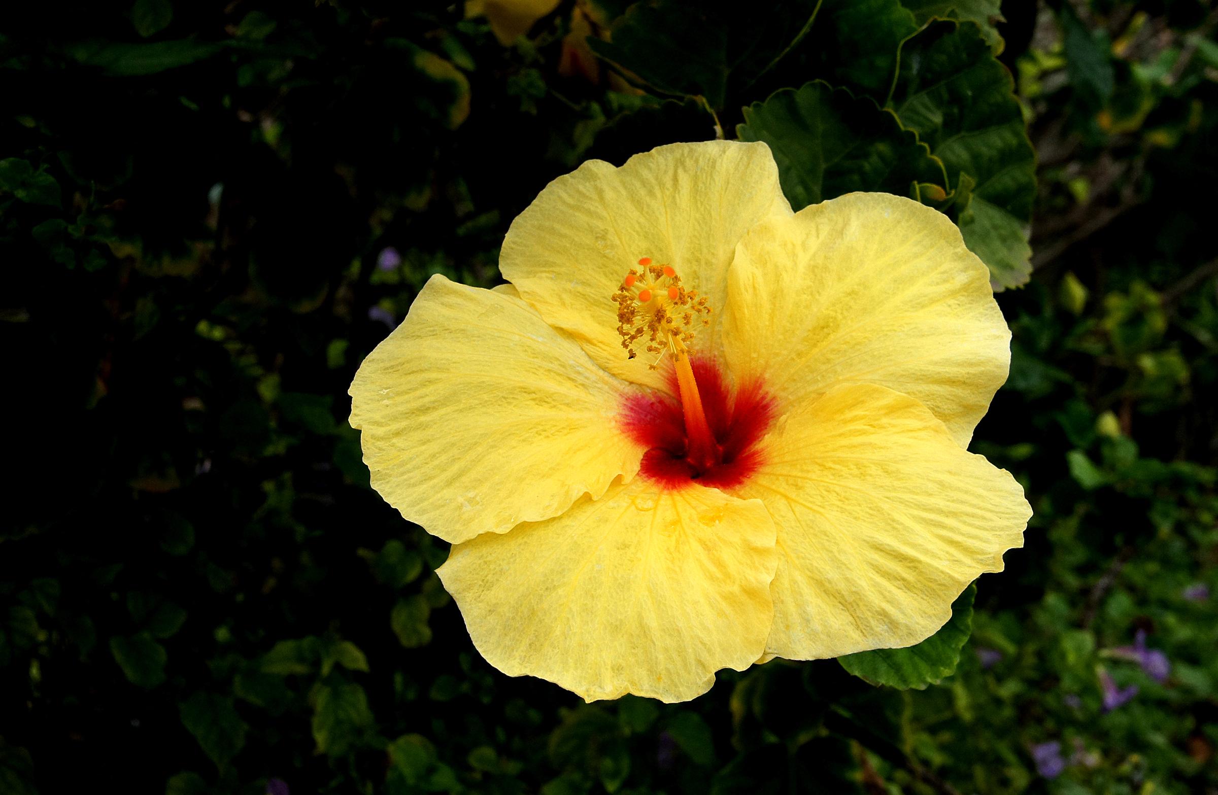 Free Images Nature Blossom Leaf Flower Petal Botany Hawaii