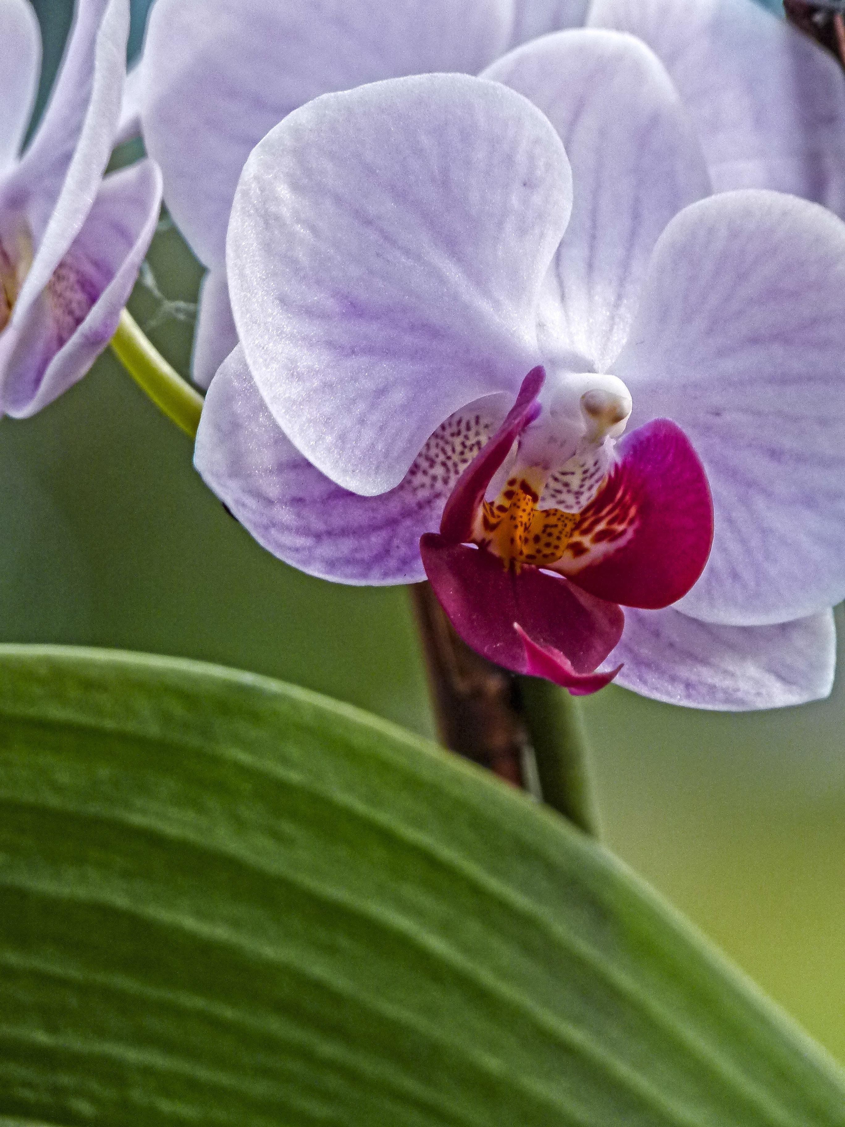 личной жизни все о цветах орхидеи фотографии подвески продажа