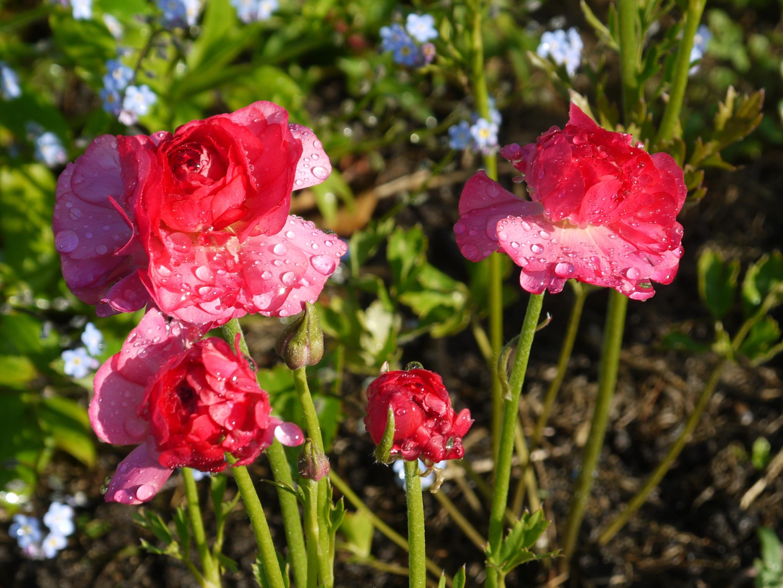 무료 이미지 : 꽃잎, 꽃 무늬의, 꽃다발, 장미 꽃, 장식, 봄, 녹색 ...
