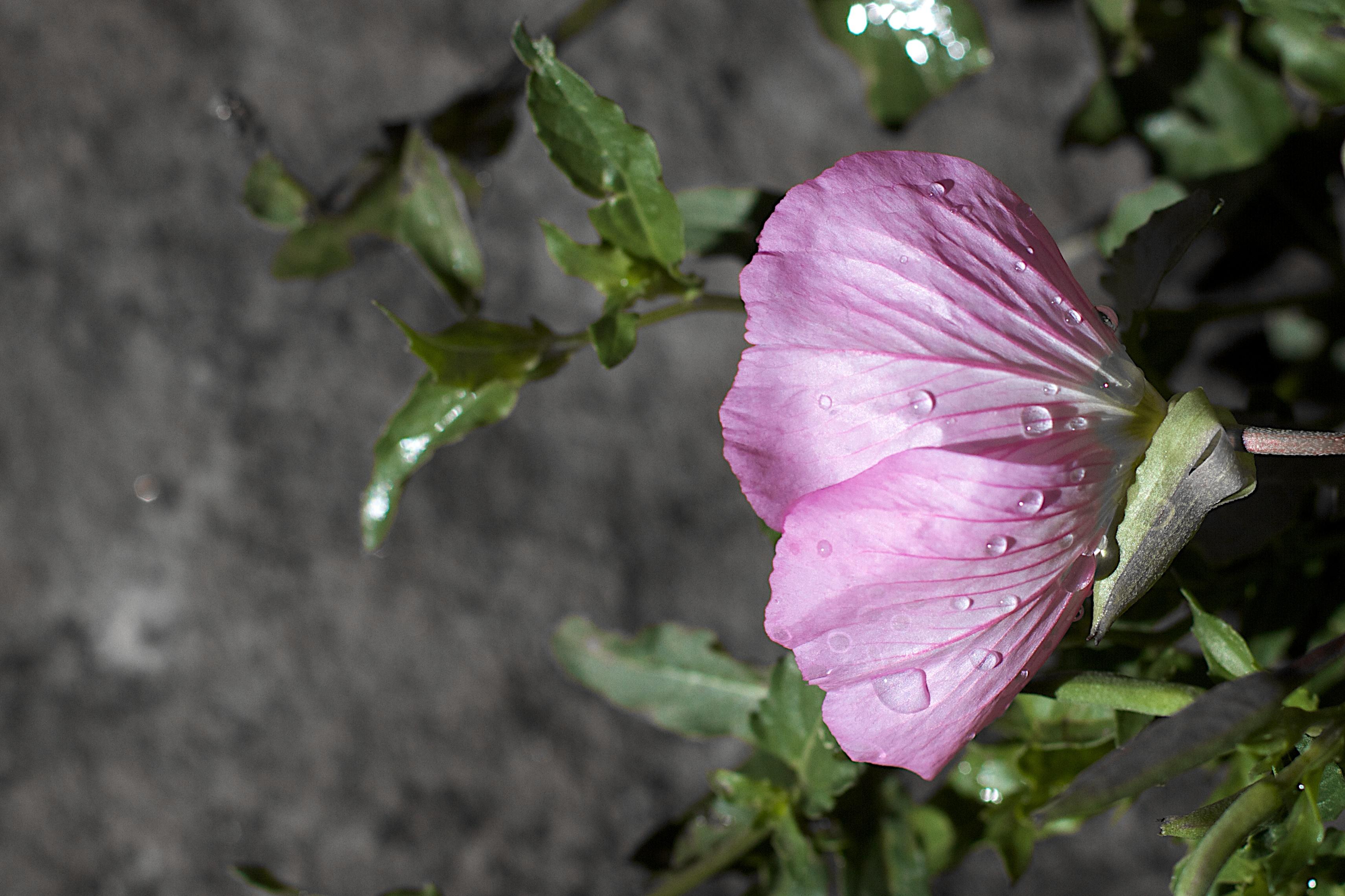 пузырь цветы до слез фото еще