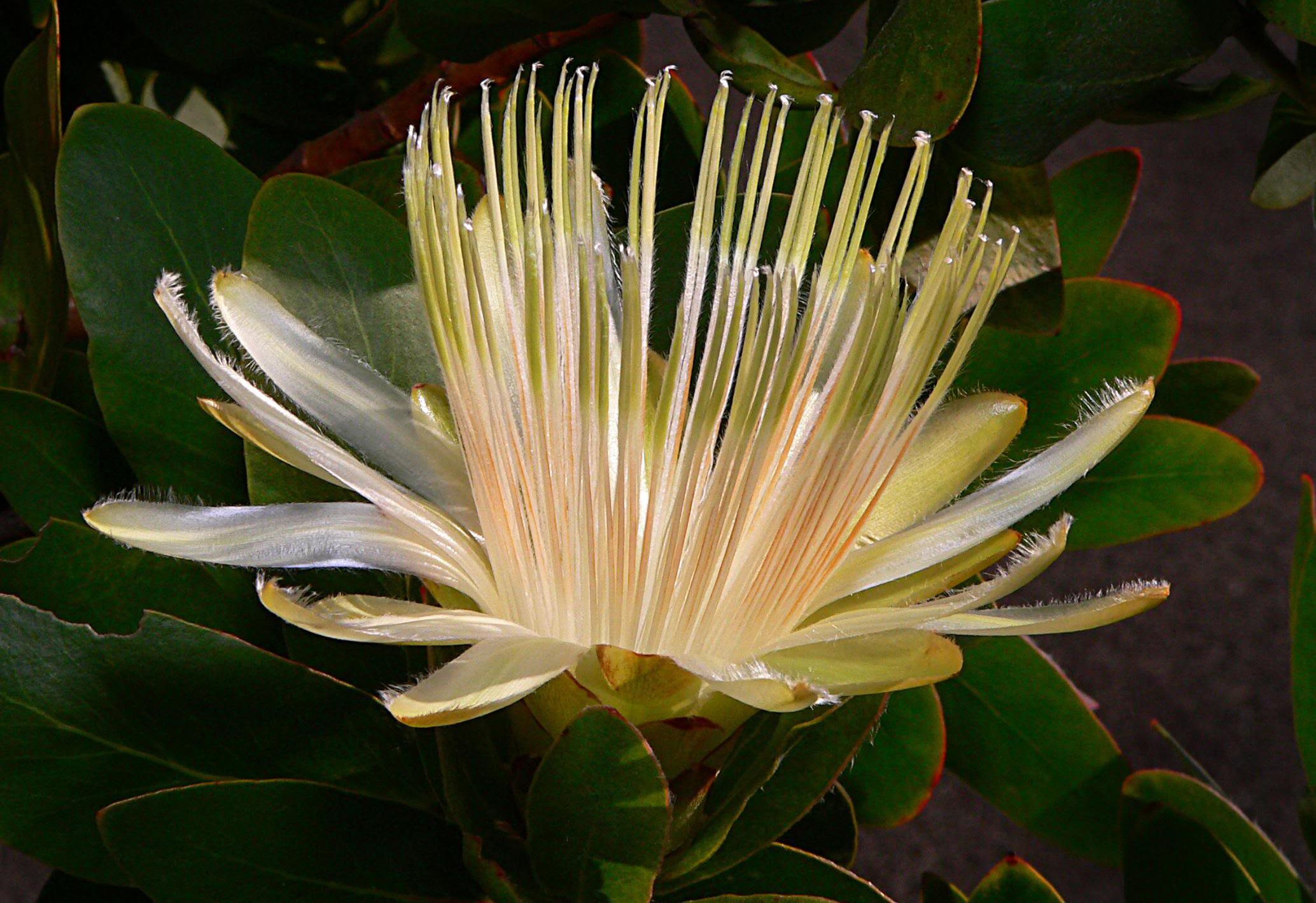 Images Gratuites La Nature Fleur Feuille Petale Vert