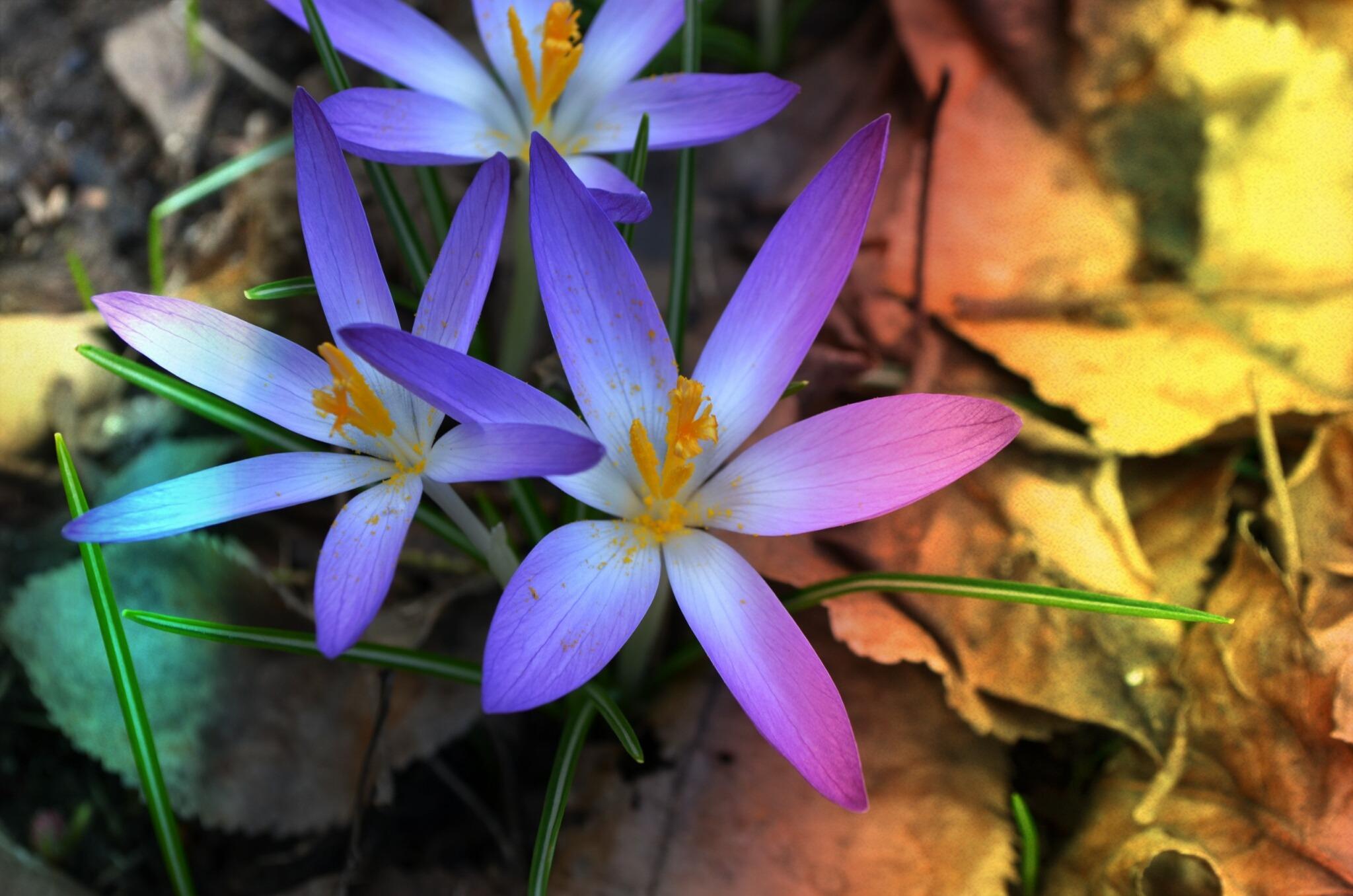 красивые дикие цветы фото интерьере