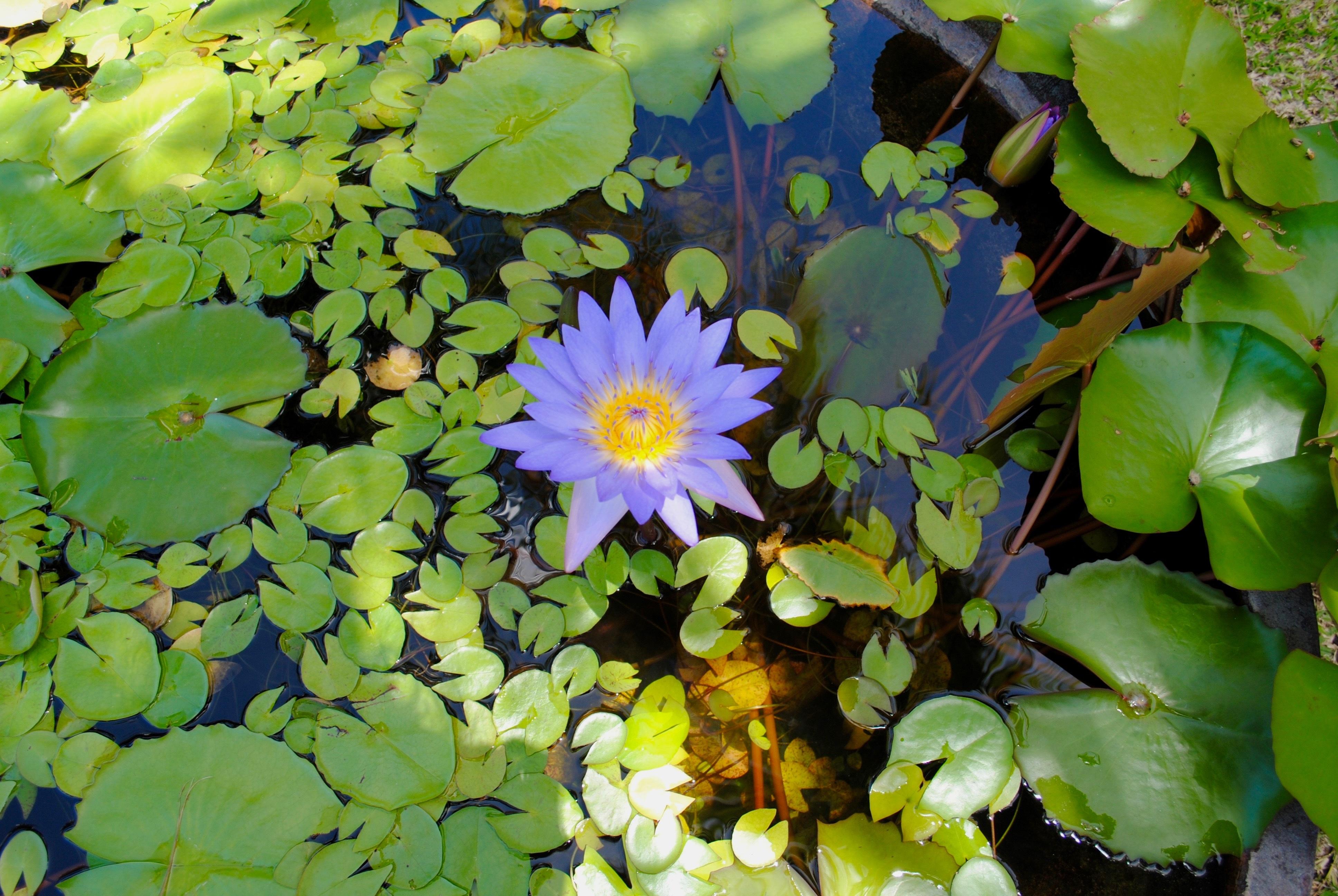 мелкой резьбе картинки цветов водоемов с названиями почитайте