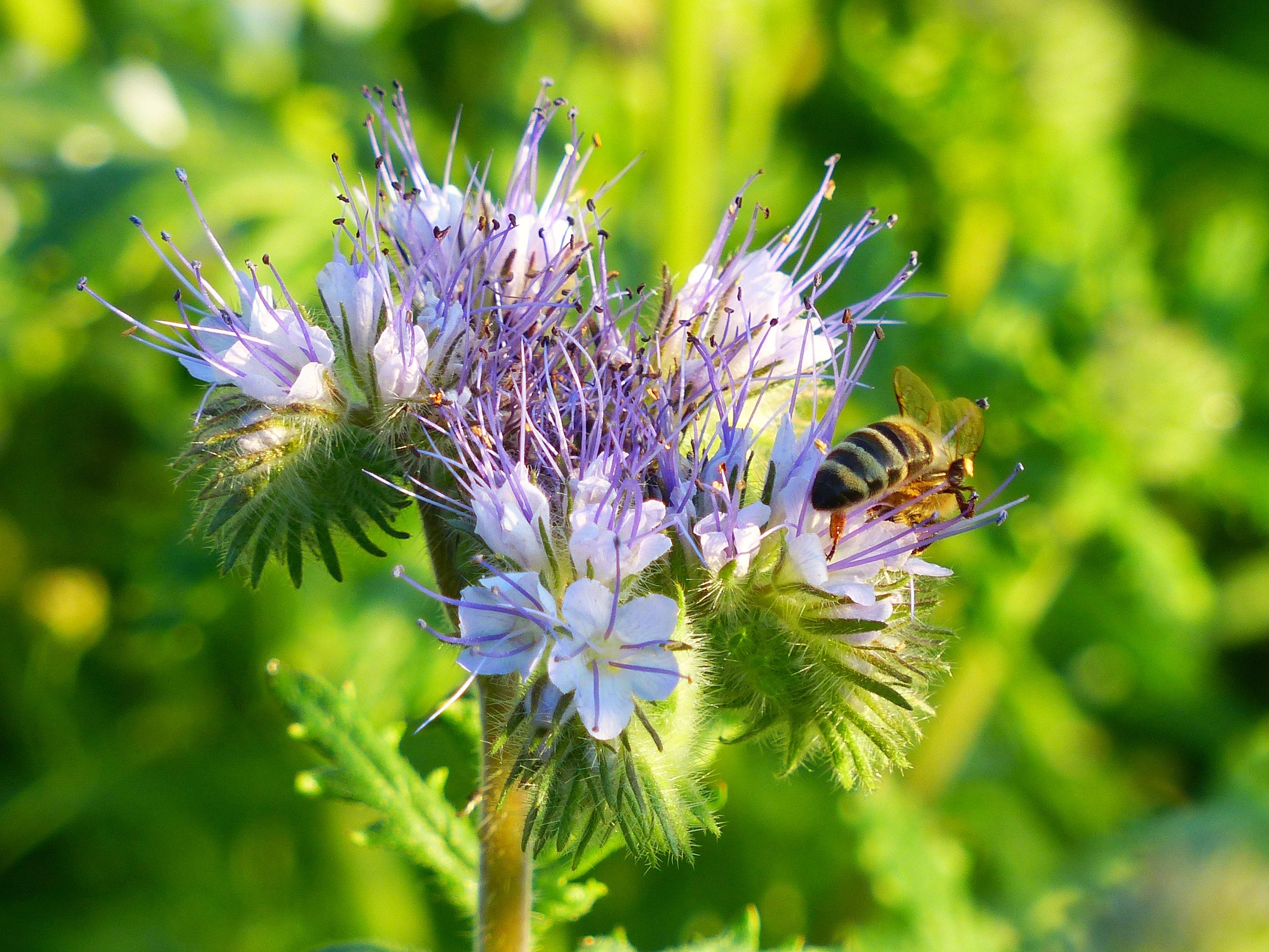 Immagini Belle Natura Fiorire Fioritura Erba Botanica Flora
