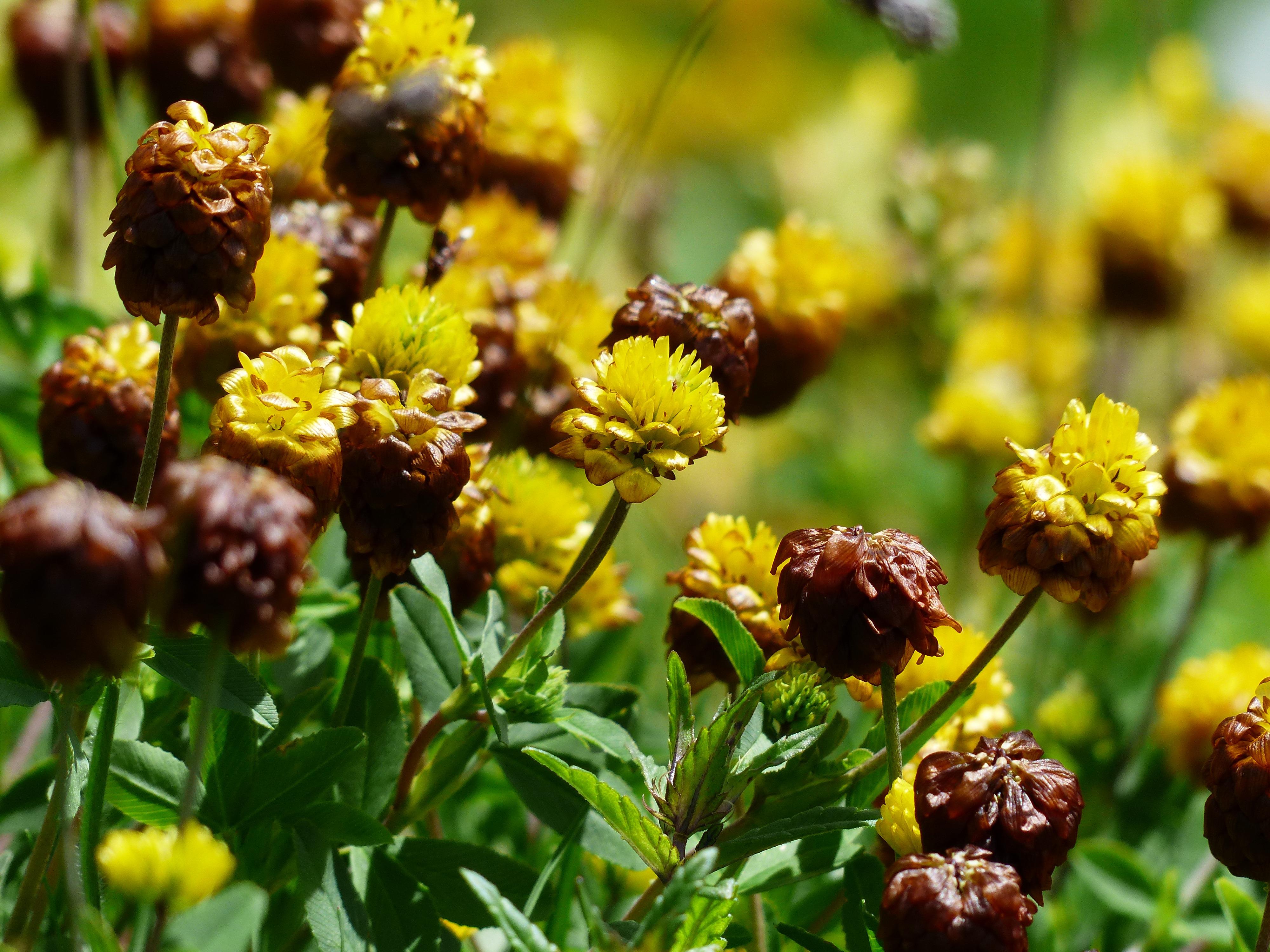 free images nature blossom food produce botany yellow