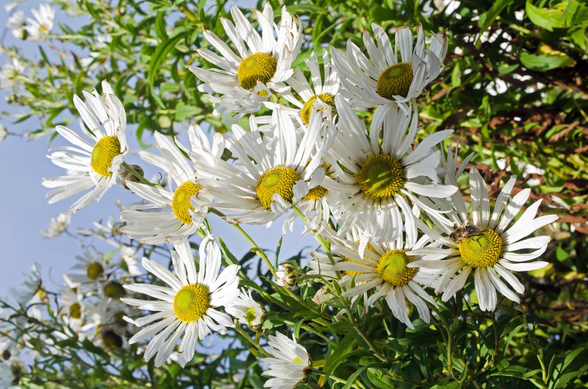 fotos gratis naturaleza prado ptalo amor regalo decoracin rojo macro natural botnica boda flora temporada plantas ornamento