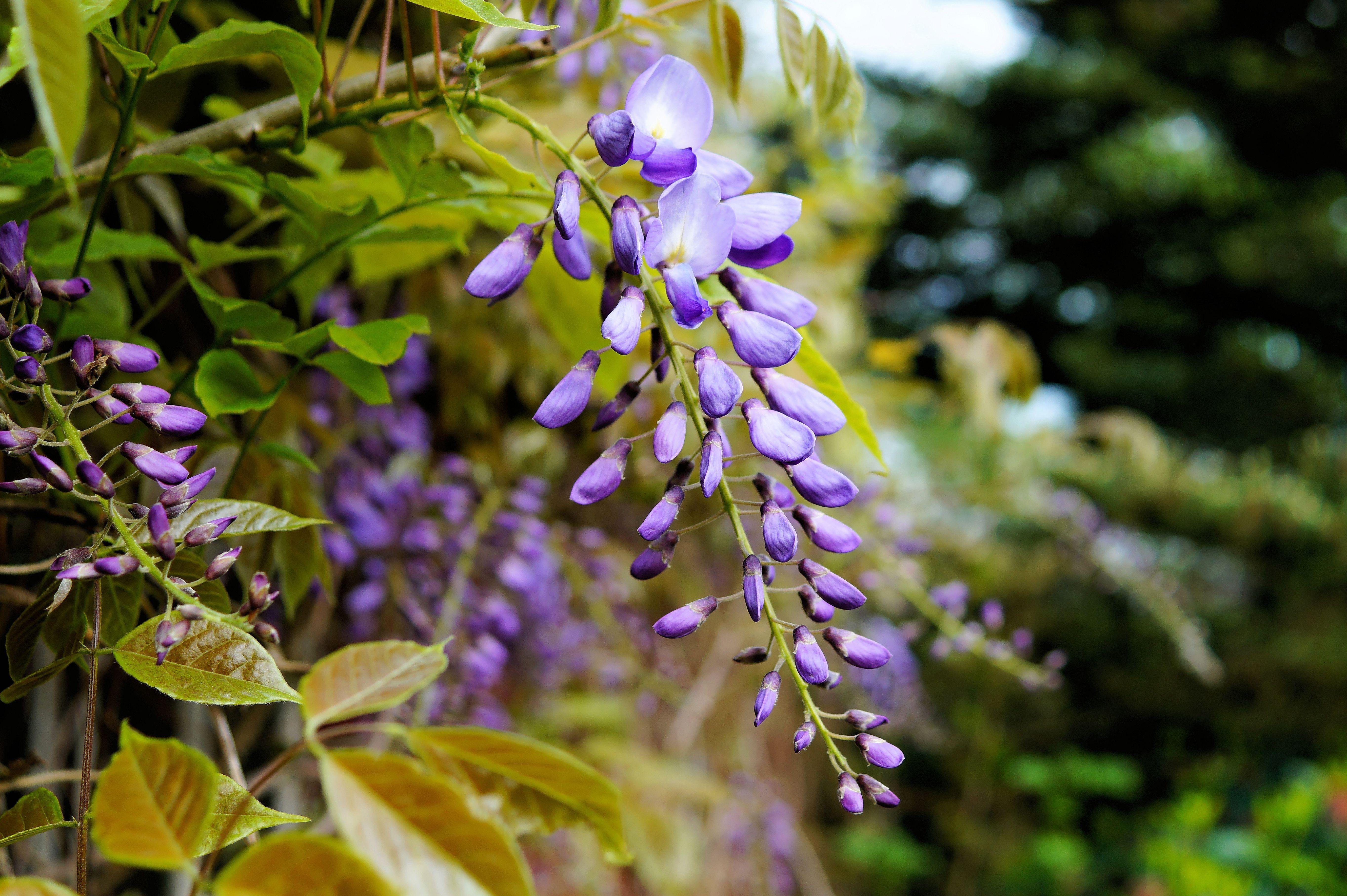 images gratuites la nature fleur prairie feuille herbe botanique jardin flore fleur. Black Bedroom Furniture Sets. Home Design Ideas