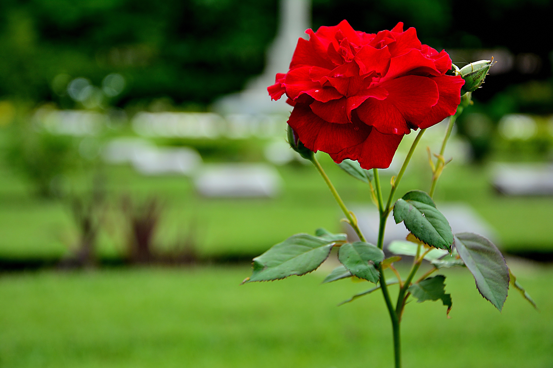 Images gratuites la nature fleur prairie feuille p tale vert romance botanique flore - Un ou une petale ...