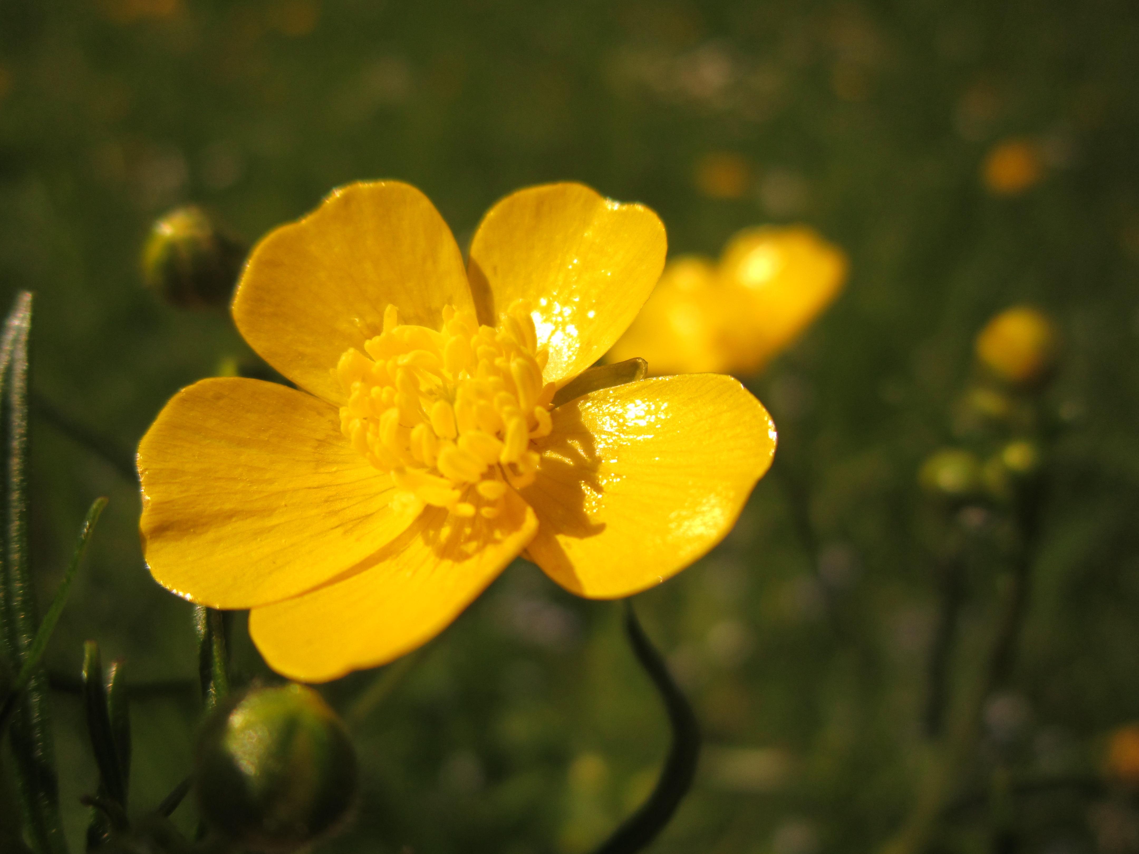 Картинки растений желтые