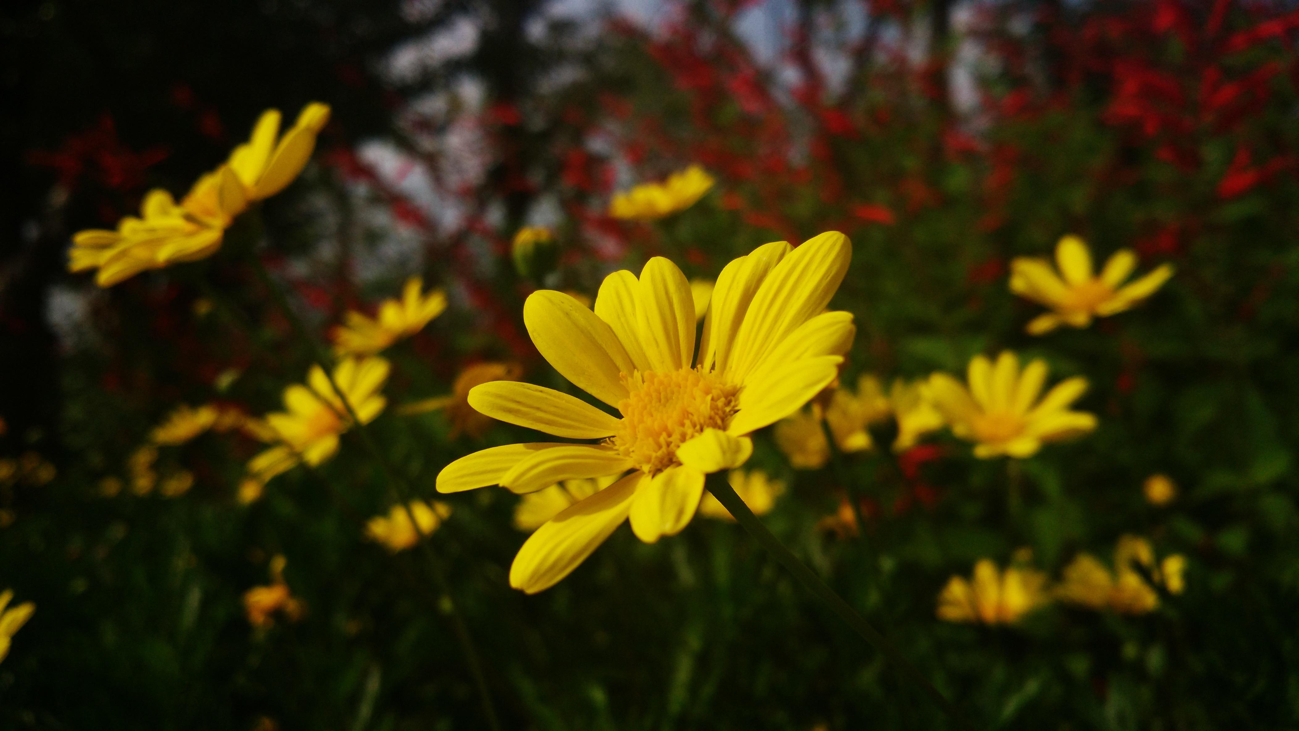 природа цветок желтый скачать