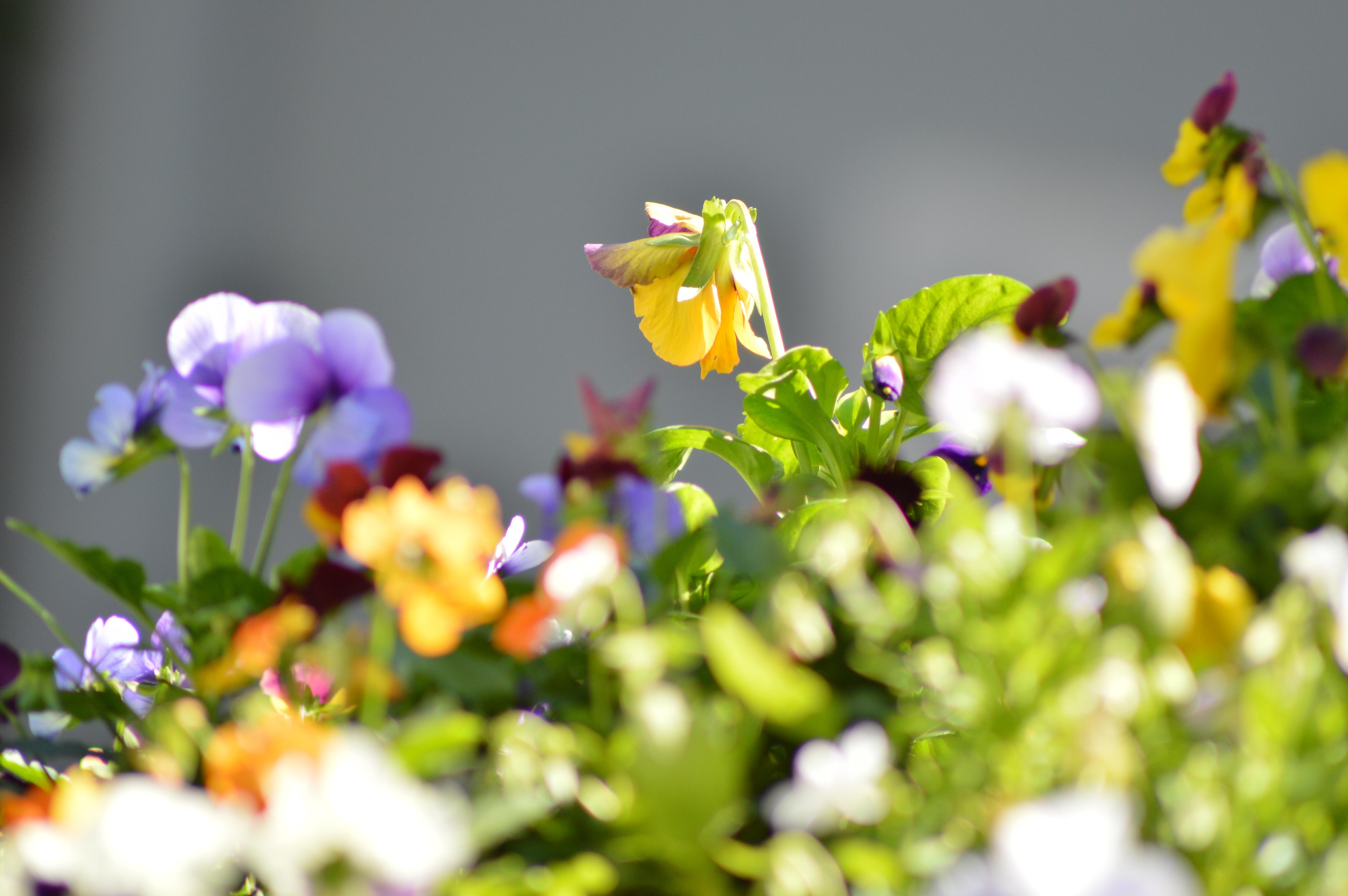 Natur blühen Pflanze Wiese Sonnenlicht Blatt Blume Blütenblatt Grün Botanik Gelb Flora Wildblume Nahansicht Makrofotografie blühende