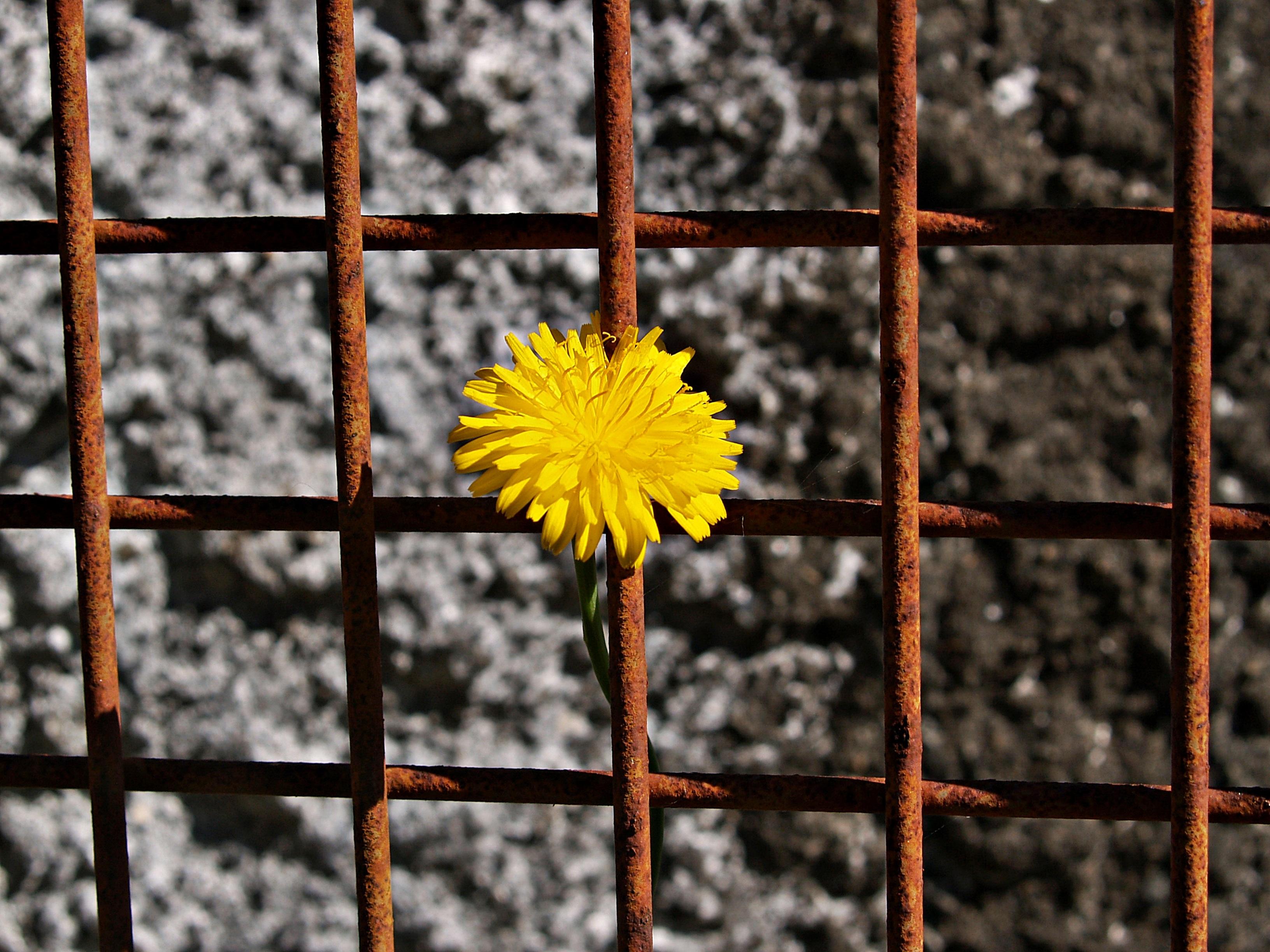 Fotos gratis : naturaleza, flor, planta, fotografía, diente de león ...