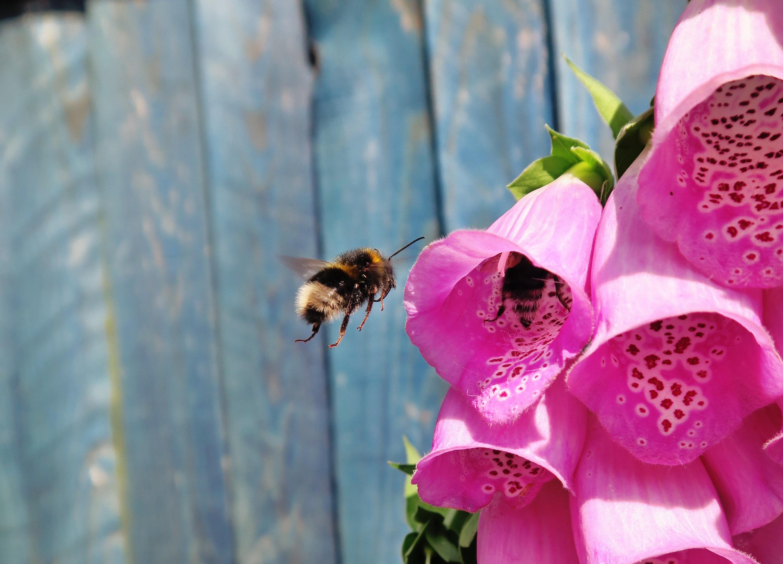 Poze Natură Plantă Floare Petală A Inflori Animal