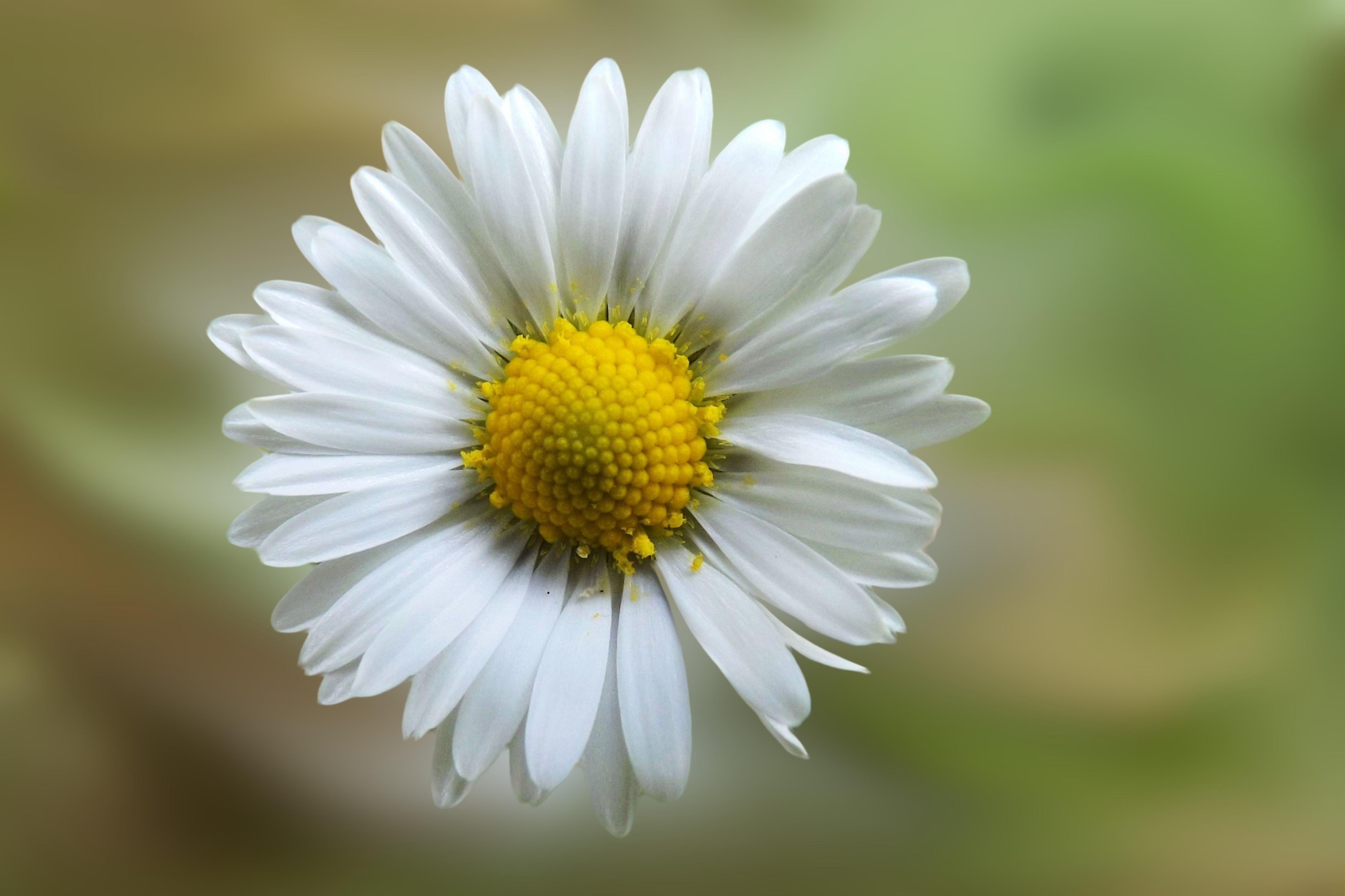 gratis afbeeldingen   natuur  bloesem  fabriek  fotografie