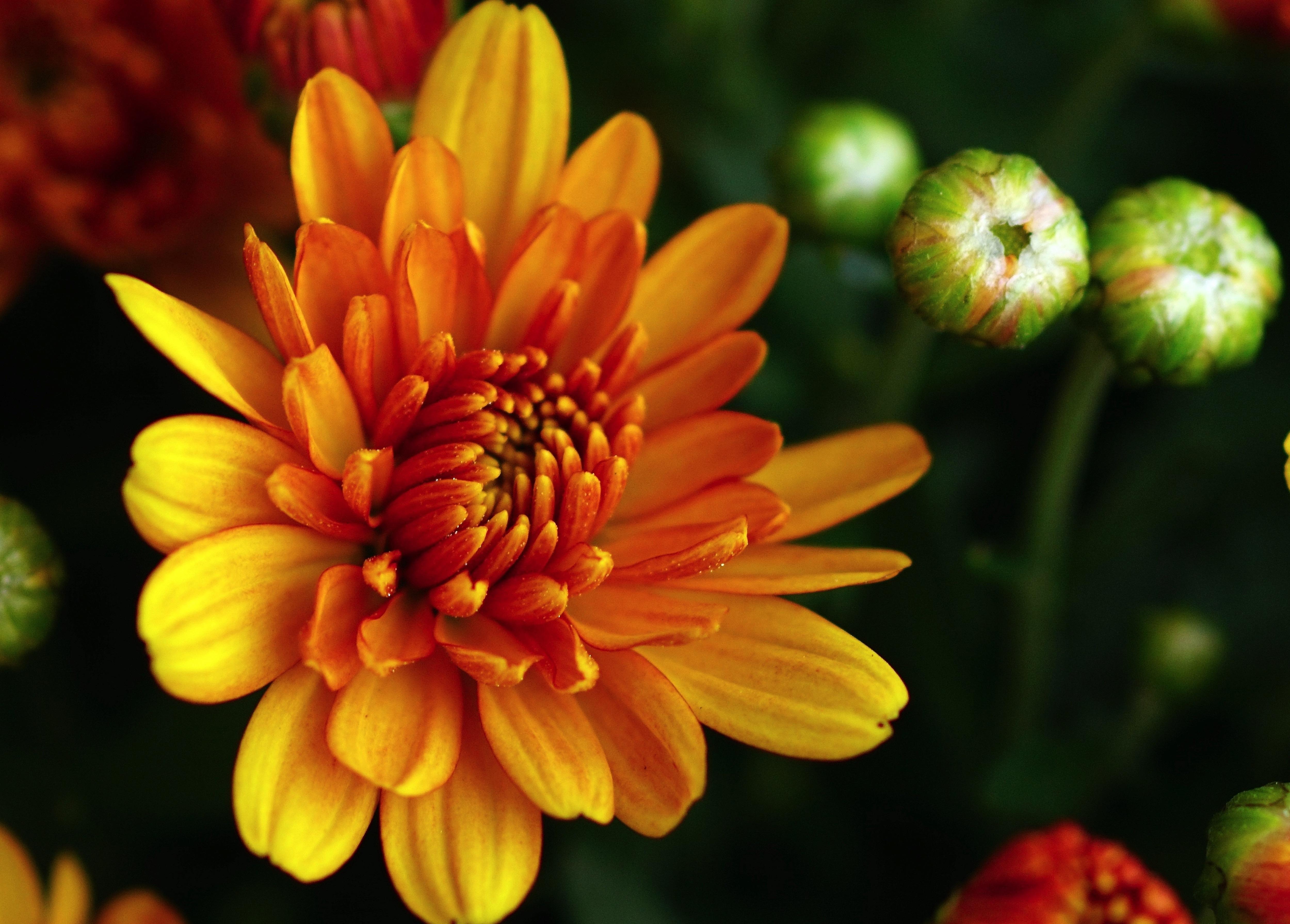 Free Images : nature, blossom, petal, bloom, orange, green, color ...