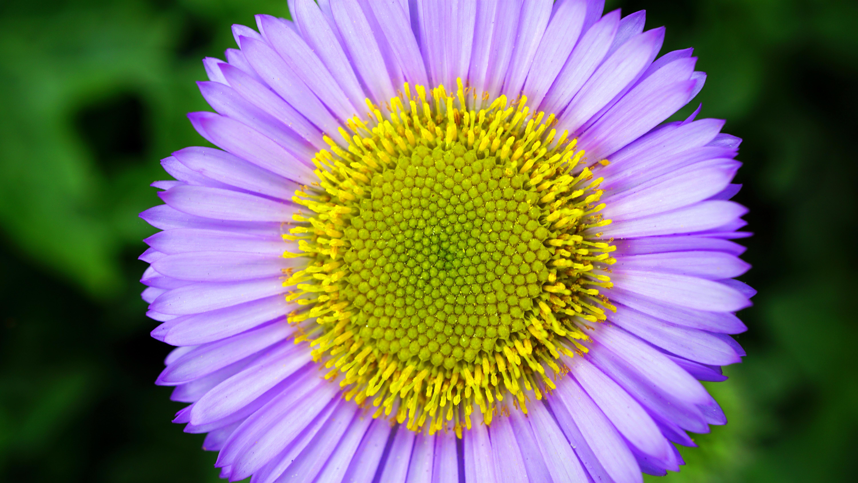 Nature Blossom Plant Photography Flower Petal Bloom Daisy Macro Botany Yellow Flora Wildflower Close Up