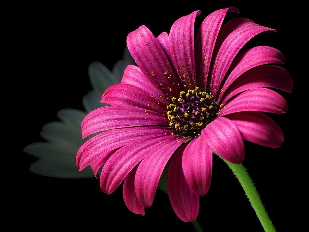 Картинки цветок на телефон