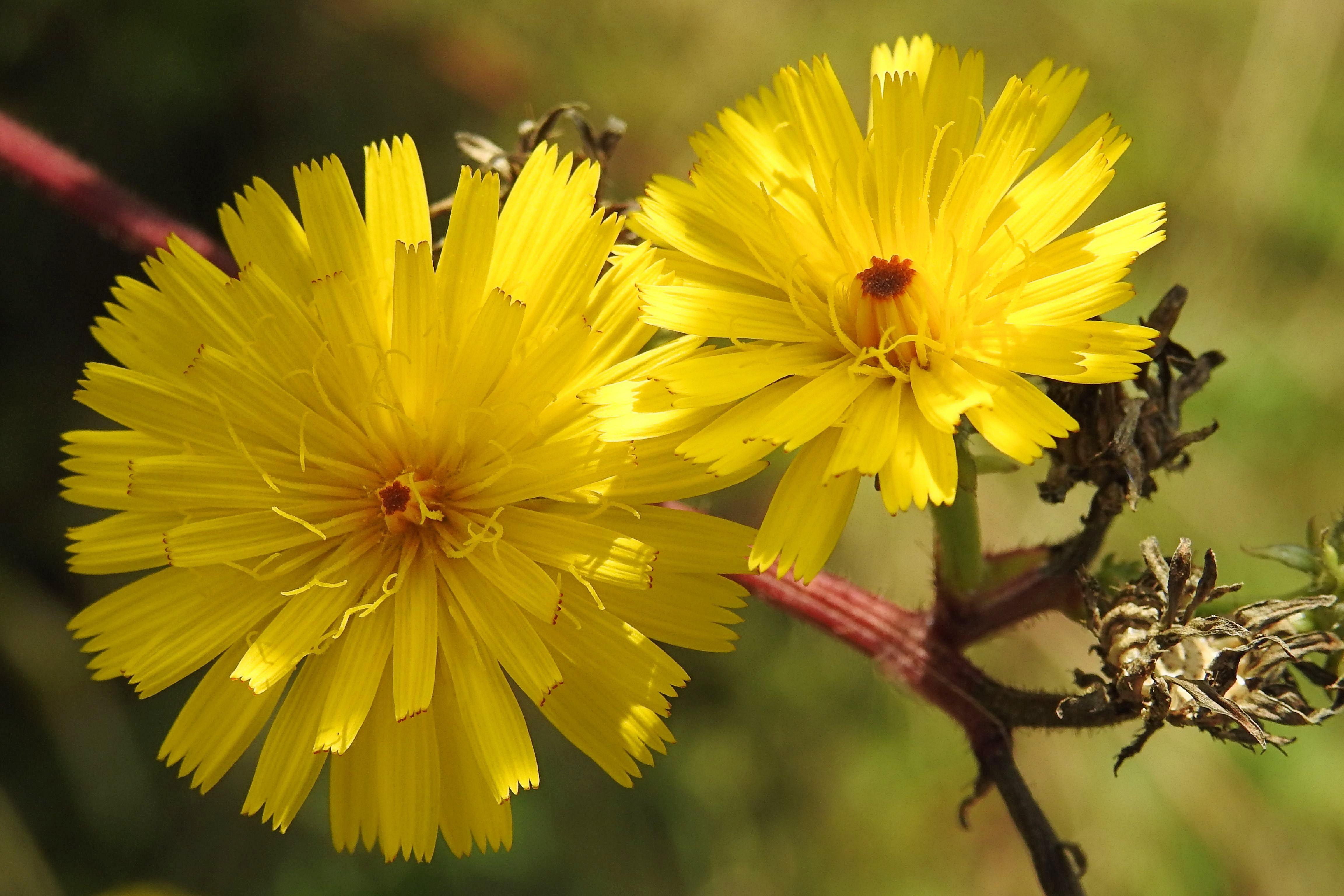 Fotos Gratis Naturaleza Fotografia Petalo Florecer Hierba