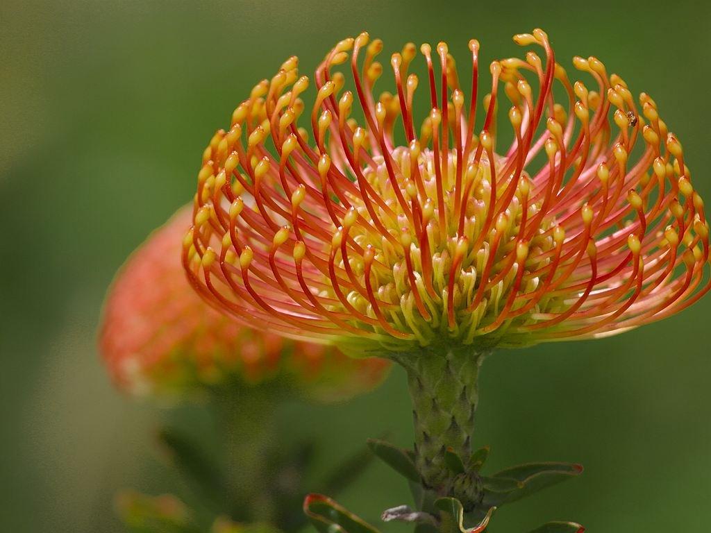экзотические цветы фото с названиями для букетов остекленные двери сделают