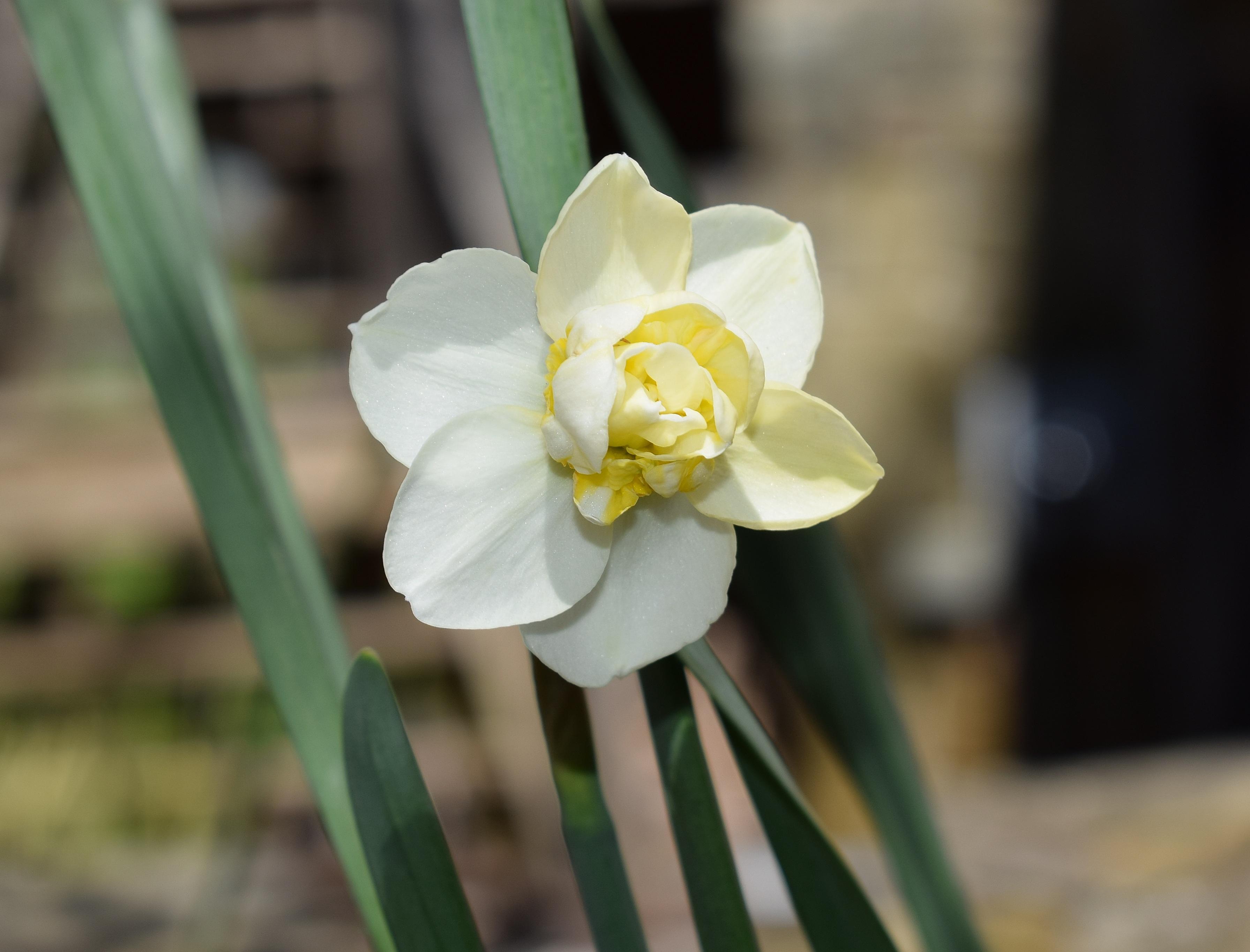 Images Gratuites La Nature Fleur La Photographie Petale