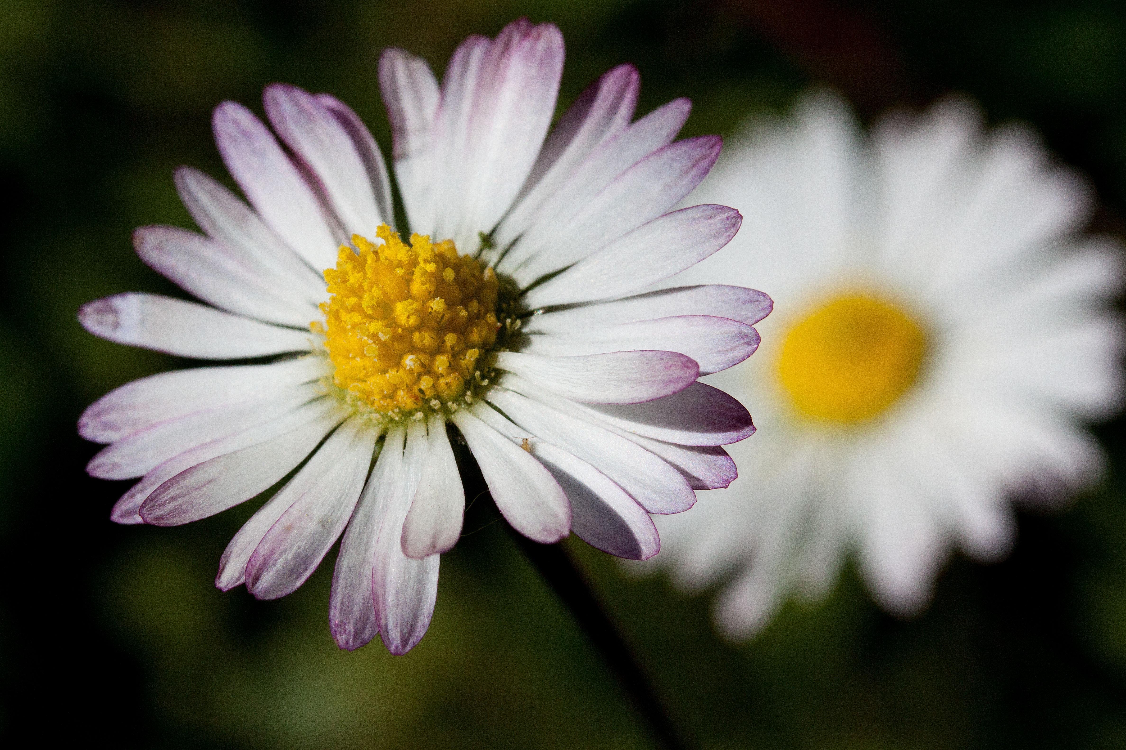 Immagini belle natura fiorire fiore petalo verde for Margherita pianta