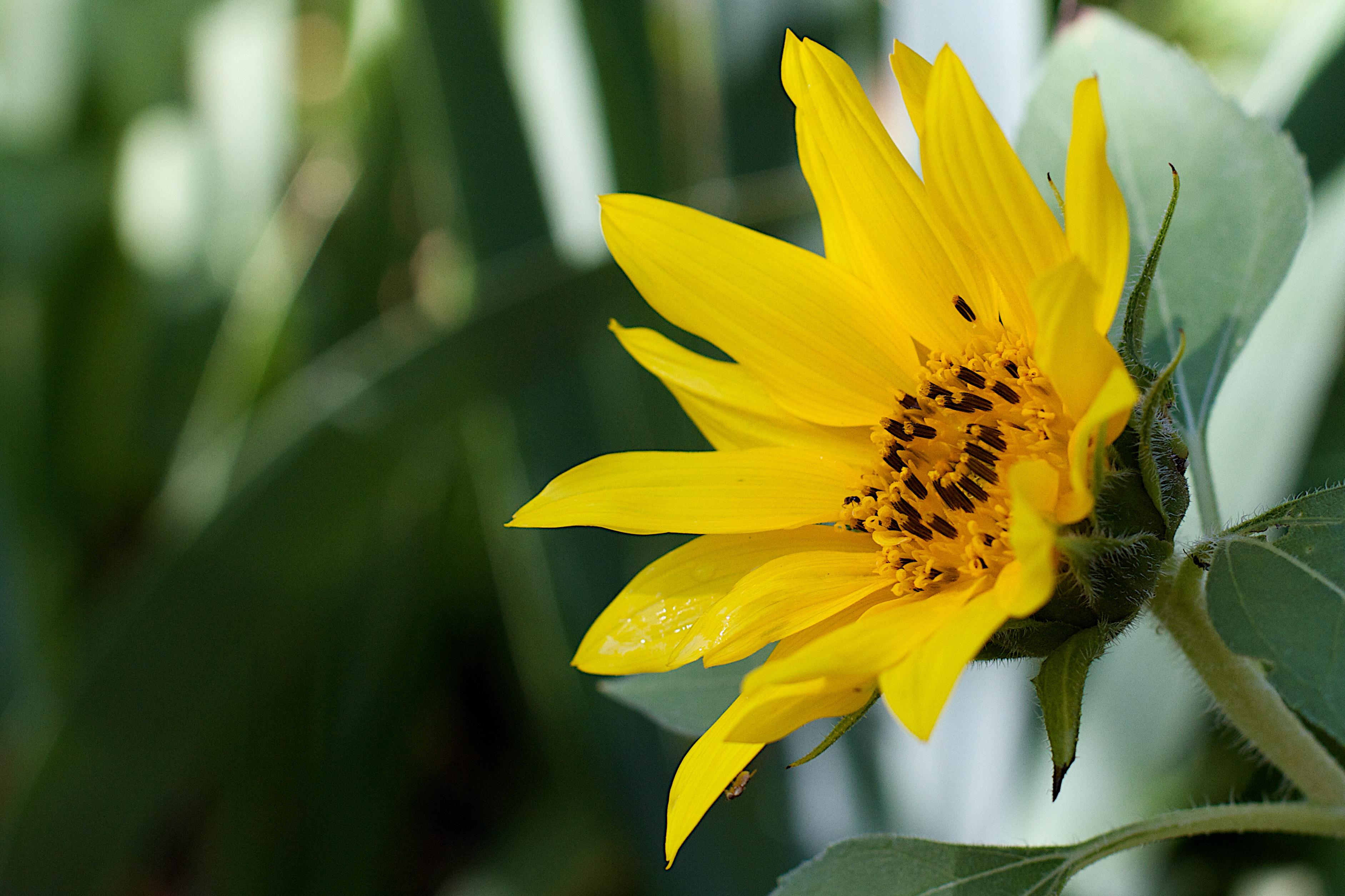 Hình ảnh Thiên Nhiên Thực Vật Nhiếp ảnh Cánh Hoa Màu