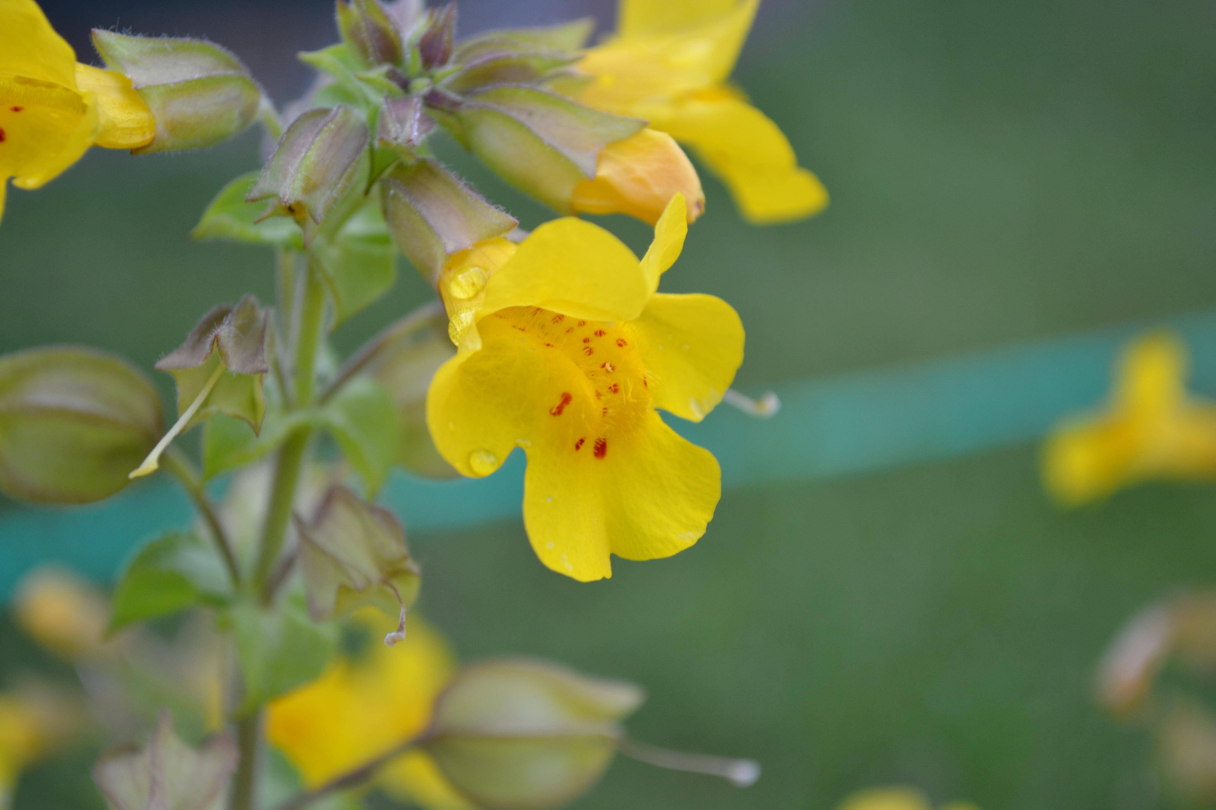 Free Images Nature Blossom Petal Green Produce Botany Yellow