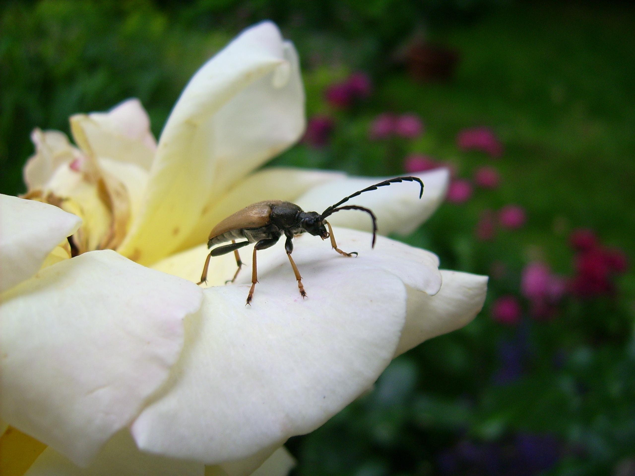 images gratuites : la nature, fleur, plante, la photographie