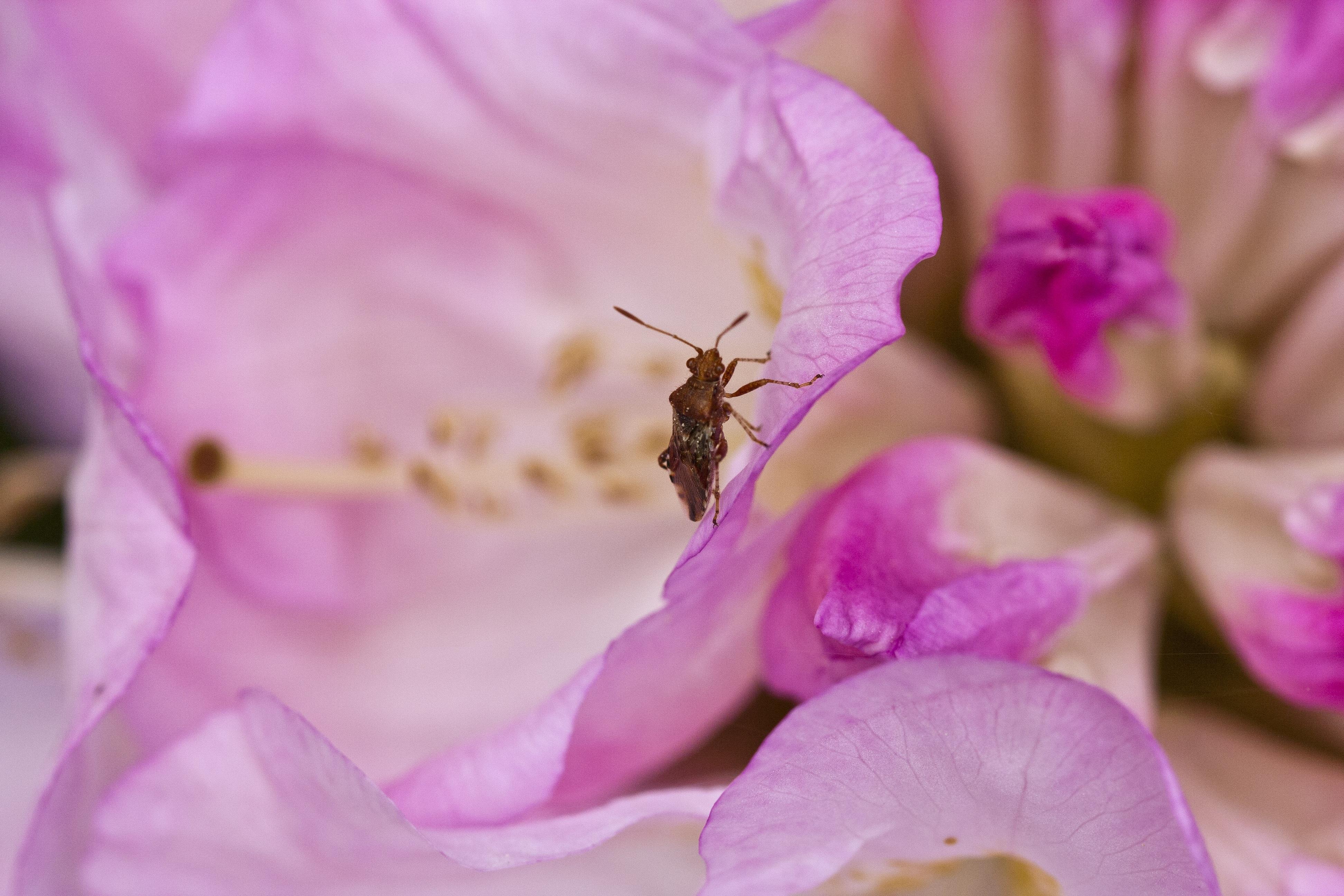 images gratuites : la nature, fleur, la photographie, violet