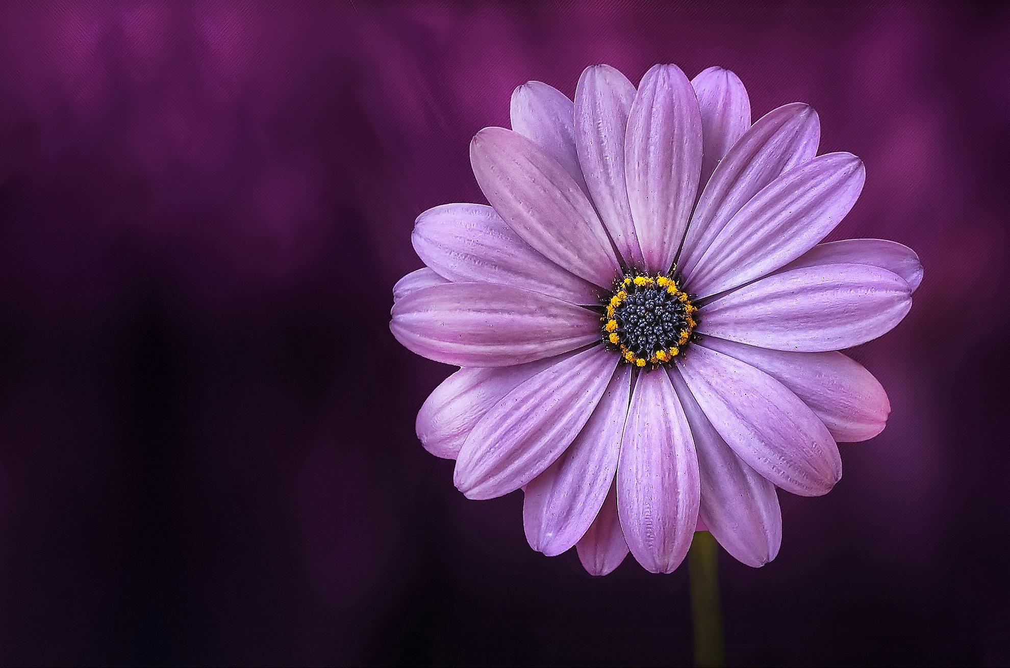 free images nature blossom flower purple petal bloom floral