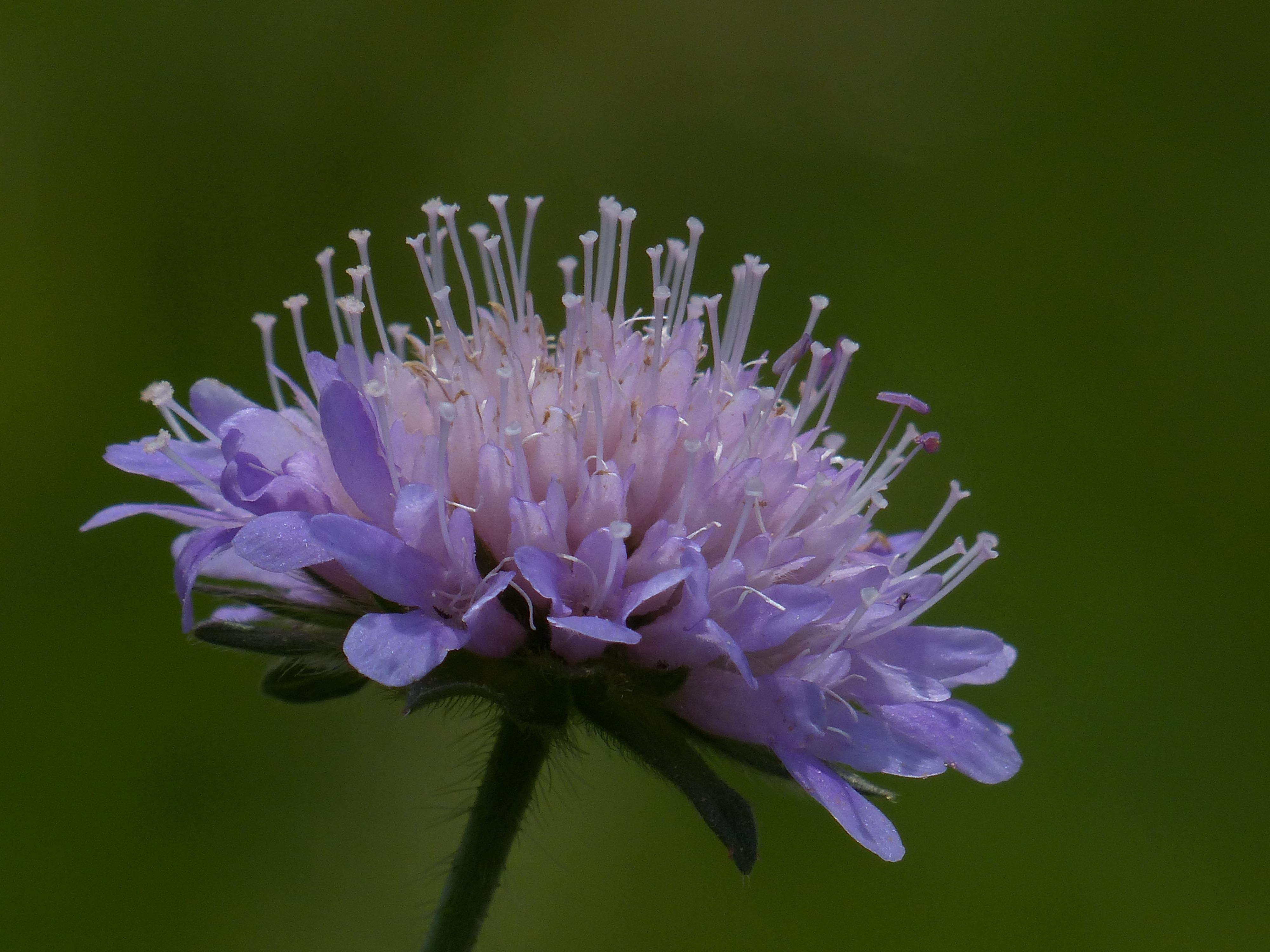 Free Images Nature Blossom Purple Petal Bloom Herb Produce