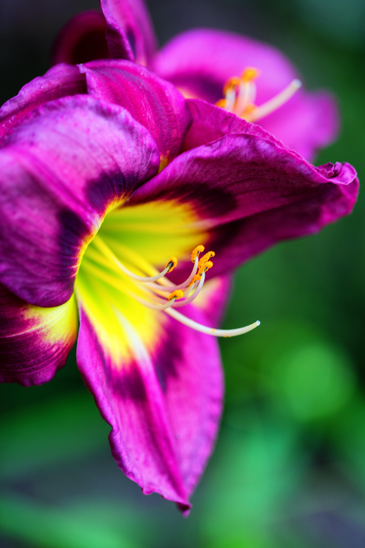 Free Images Nature Blossom Flower Purple Petal Spring Garden