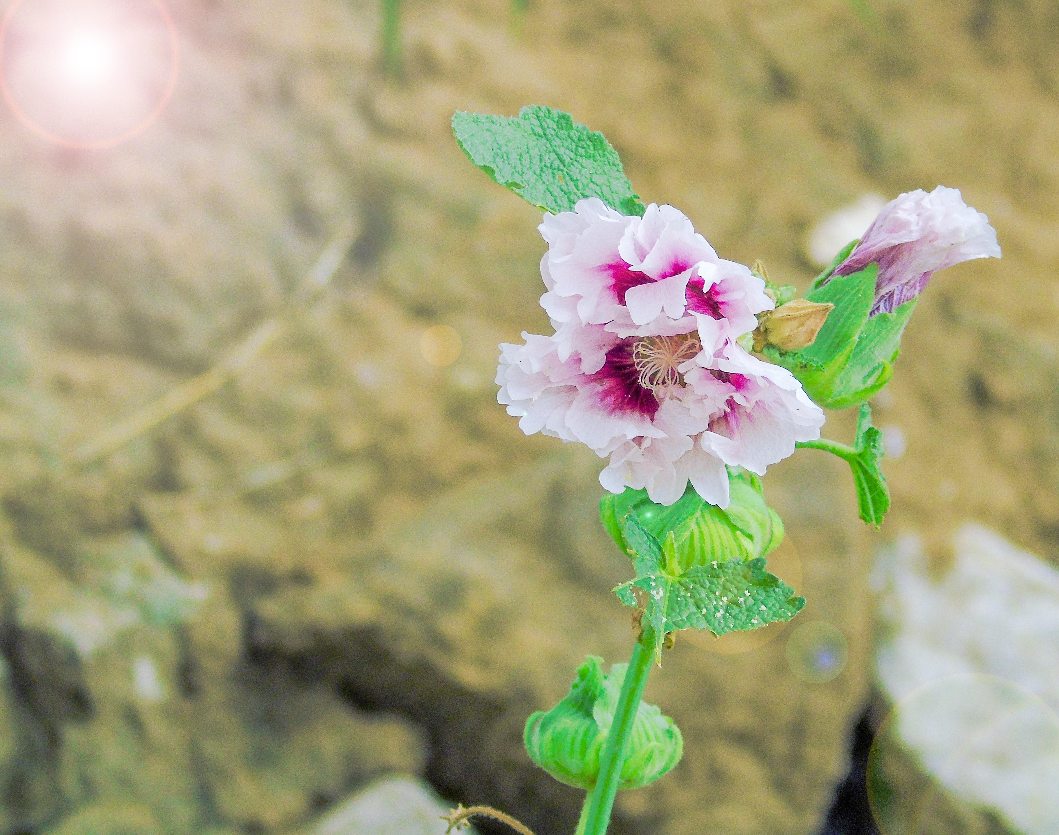Fiori Selvatici Bianchi.Immagini Belle Natura Fiorire Foglia Fiore Petalo Da Solo