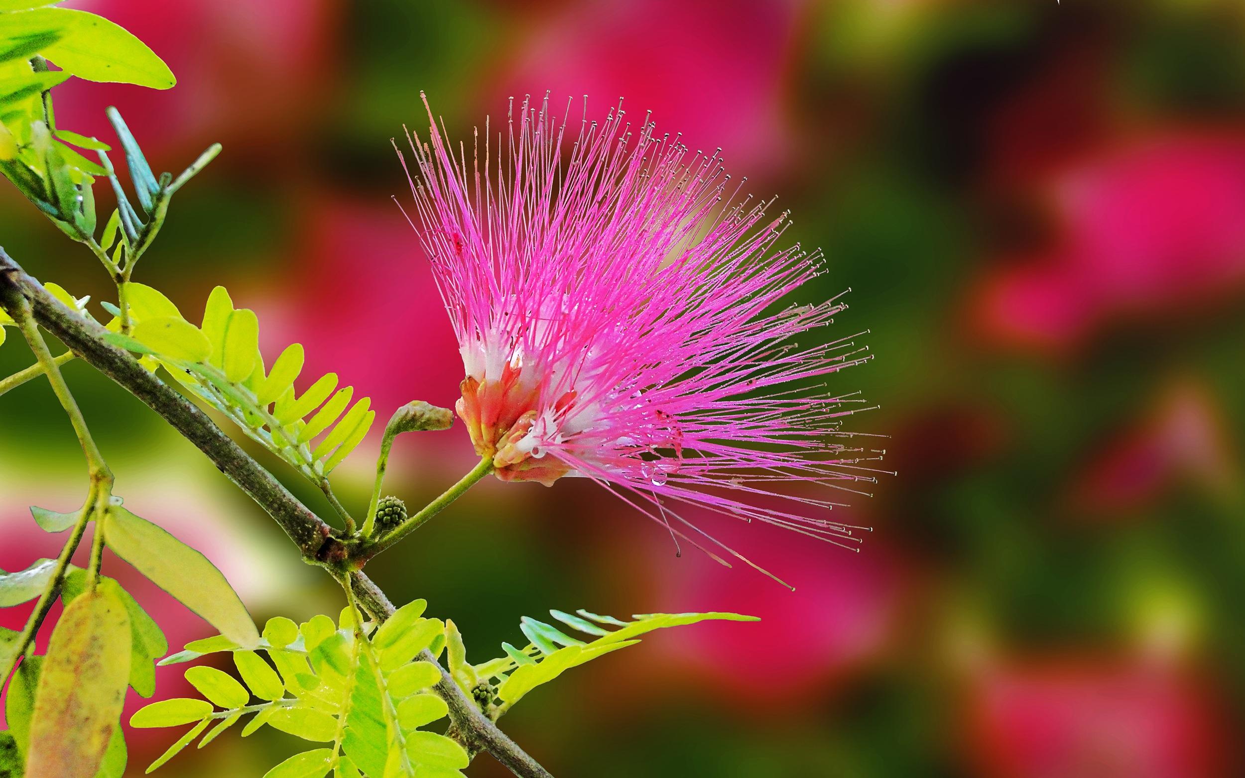 free images : nature, blossom, leaf, petal, autumn, botany, flora