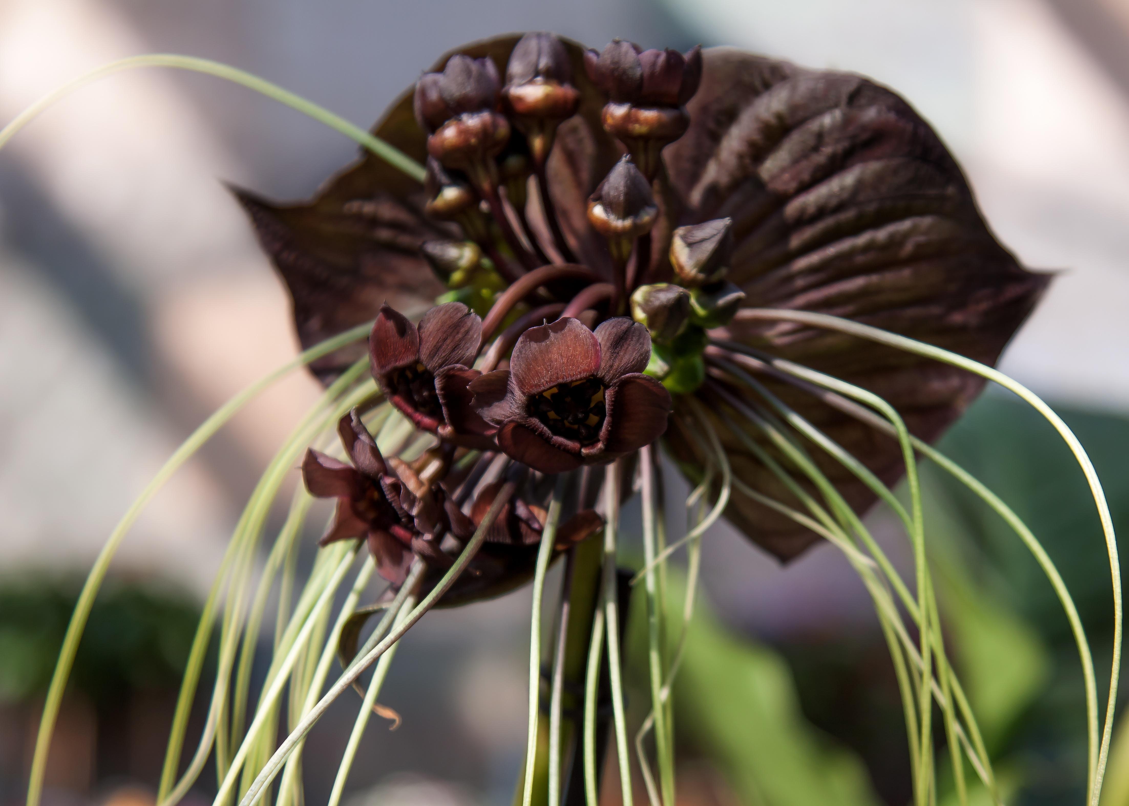 Free Images Nature Blossom Leaf Flower Petal Bloom Botany