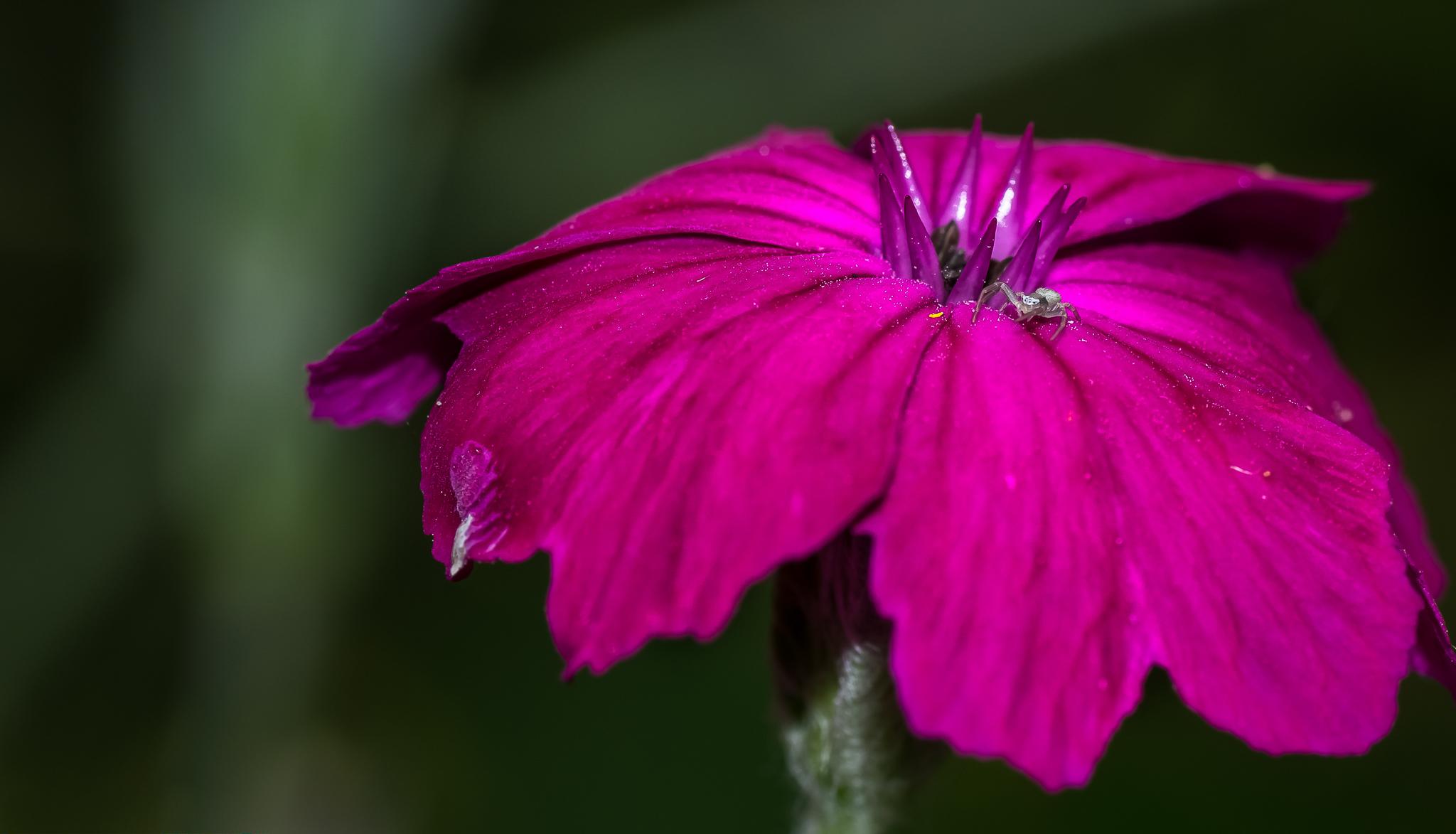 Fotos gratis : naturaleza, fotografía, hoja, pétalo, rosado, flora ...