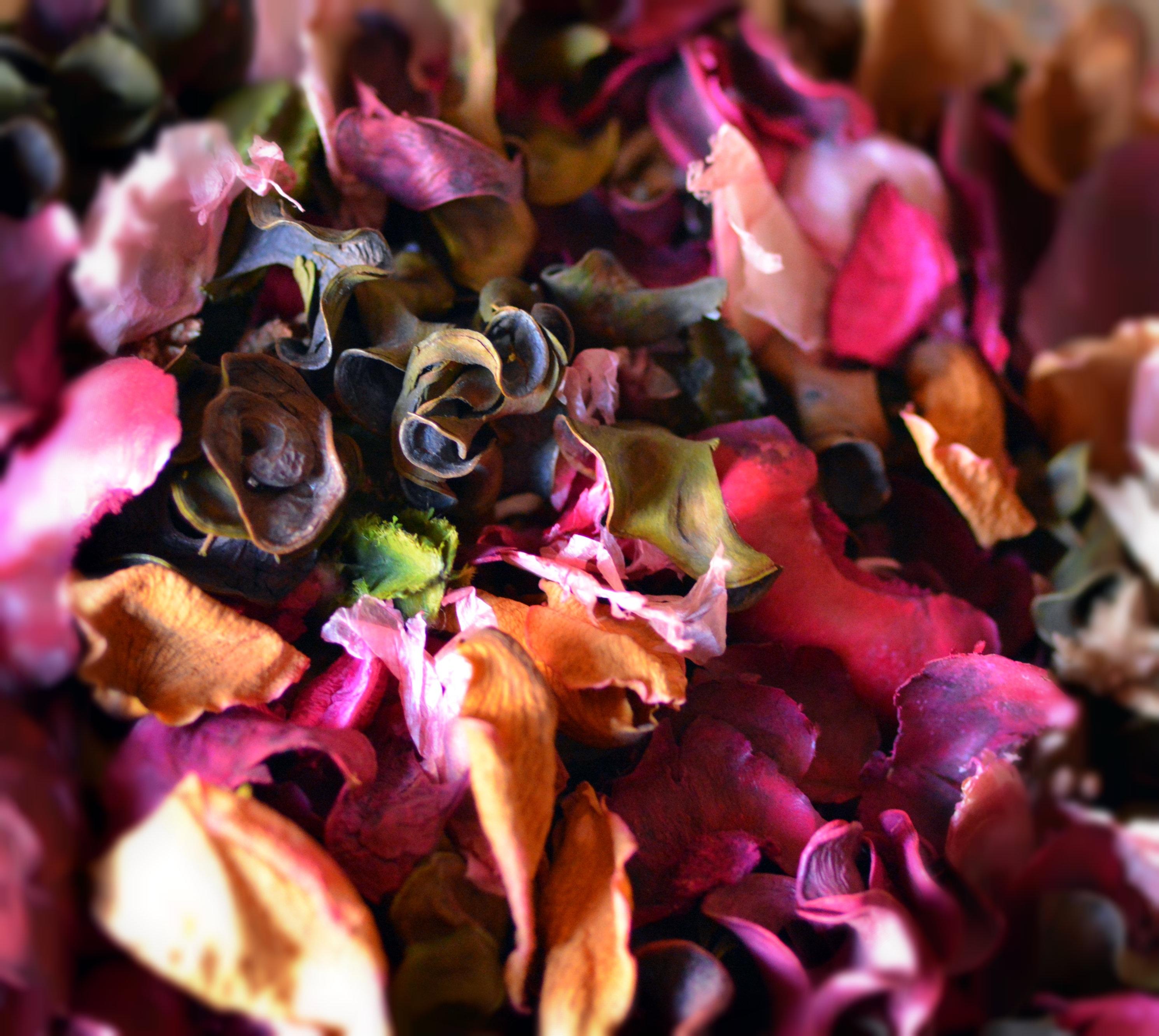 Все крупноцветковые хризантемы фото пока бисквит