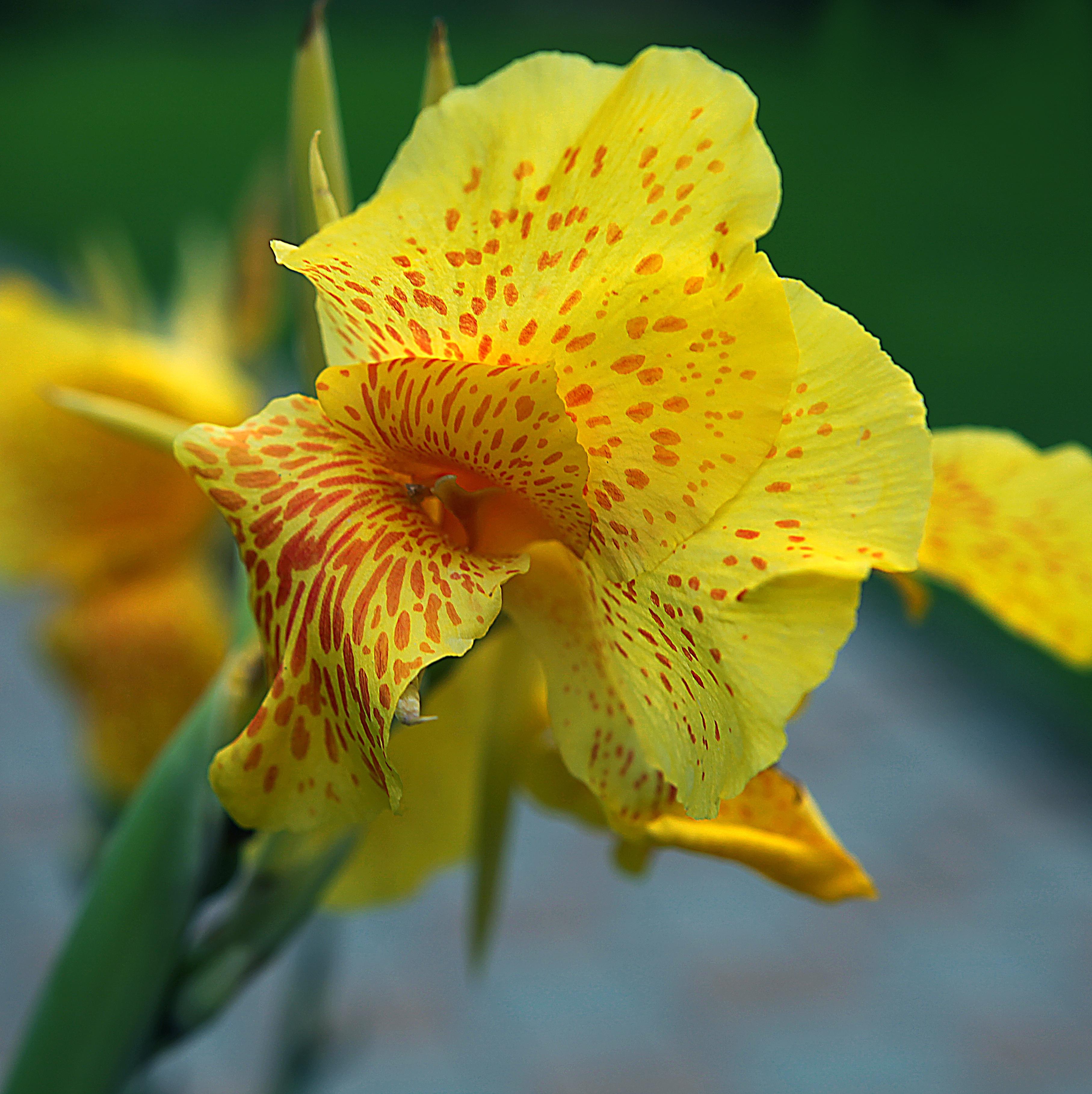Free Images Nature Blossom Leaf Petal Summer Green Botany