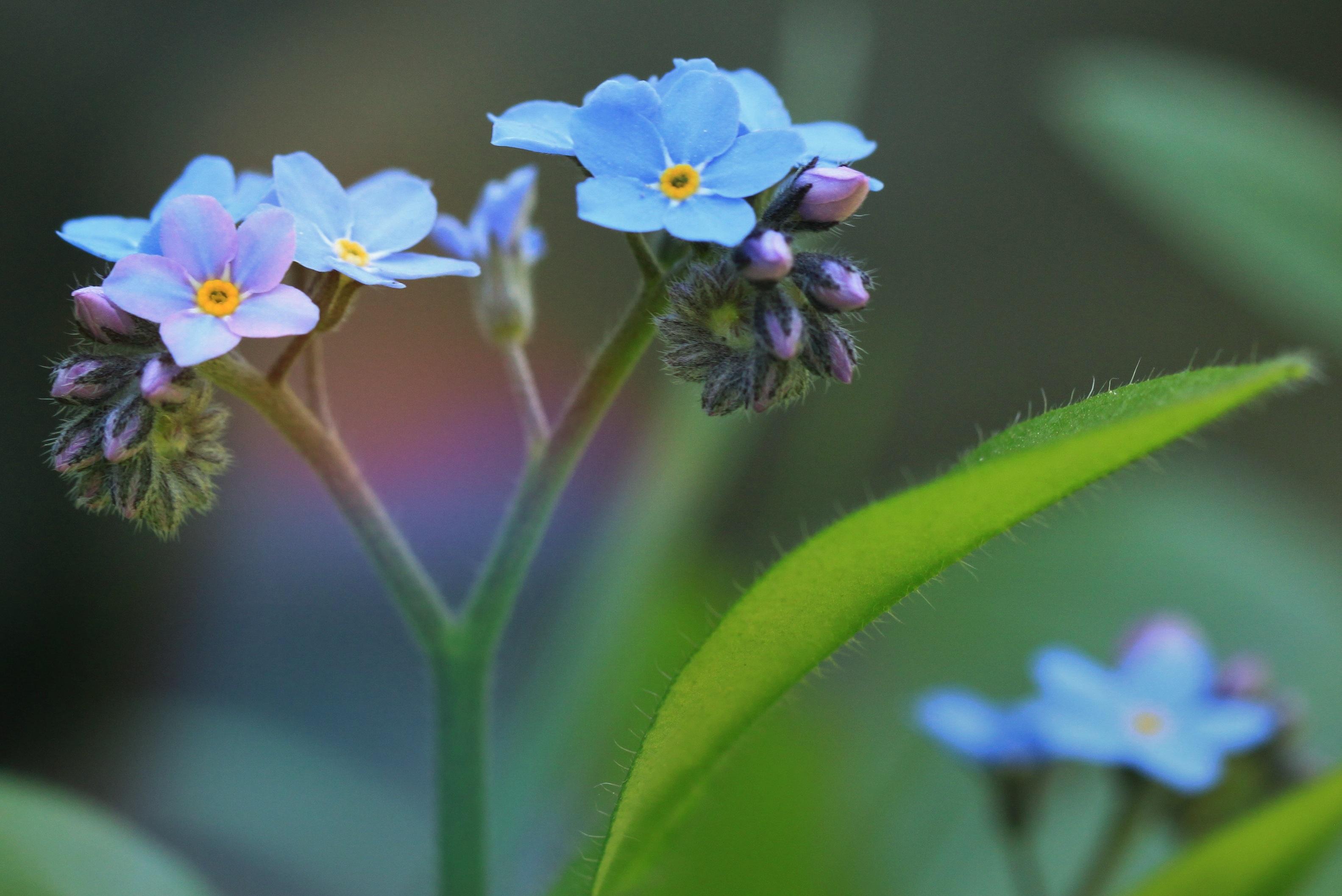 Kostenlose foto : Natur, blühen, Fotografie, Wiese, Blume ...