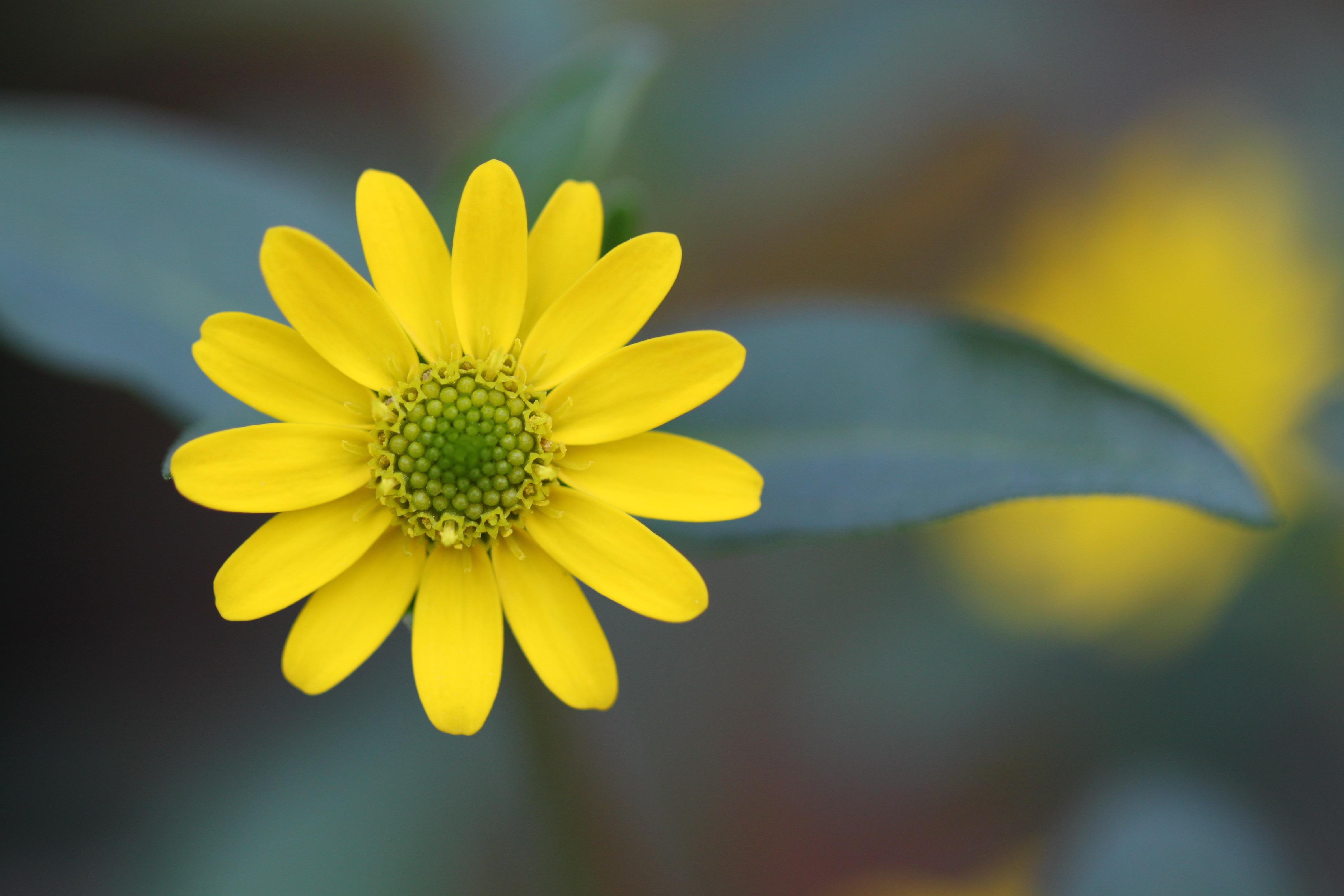 природа крупный план цветы желтые nature large plan flowers yellow без смс