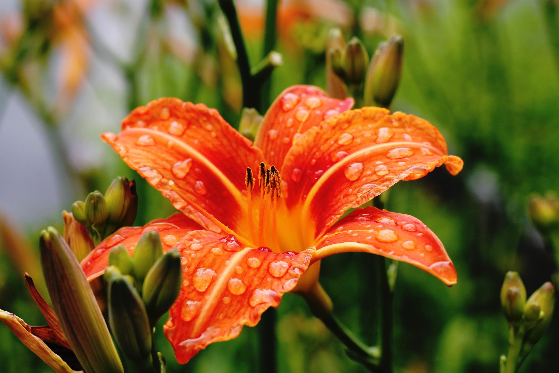 Images Gratuites La Nature Fleur Pluie Feuille Floraison