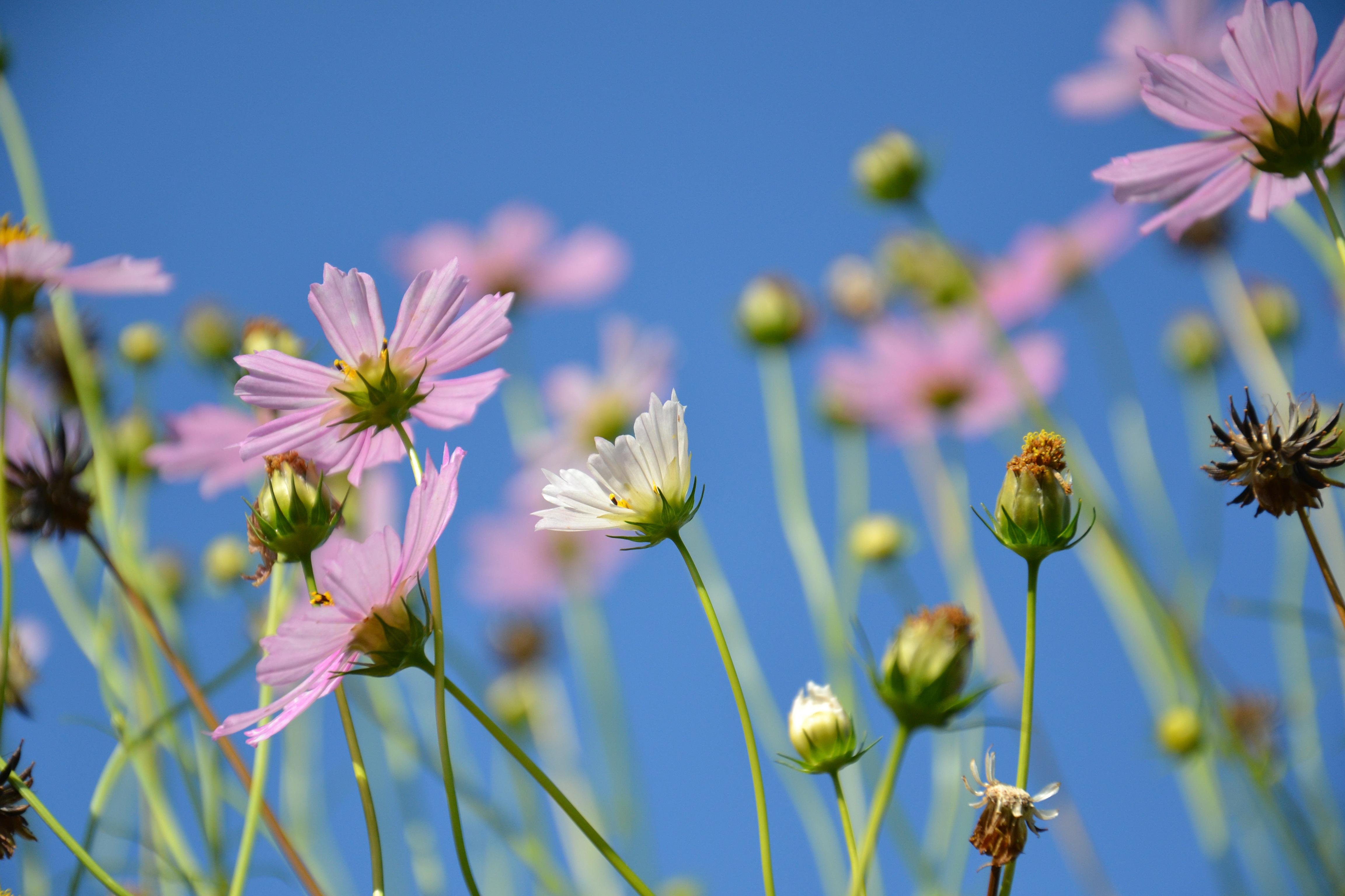 Цветы поле лето