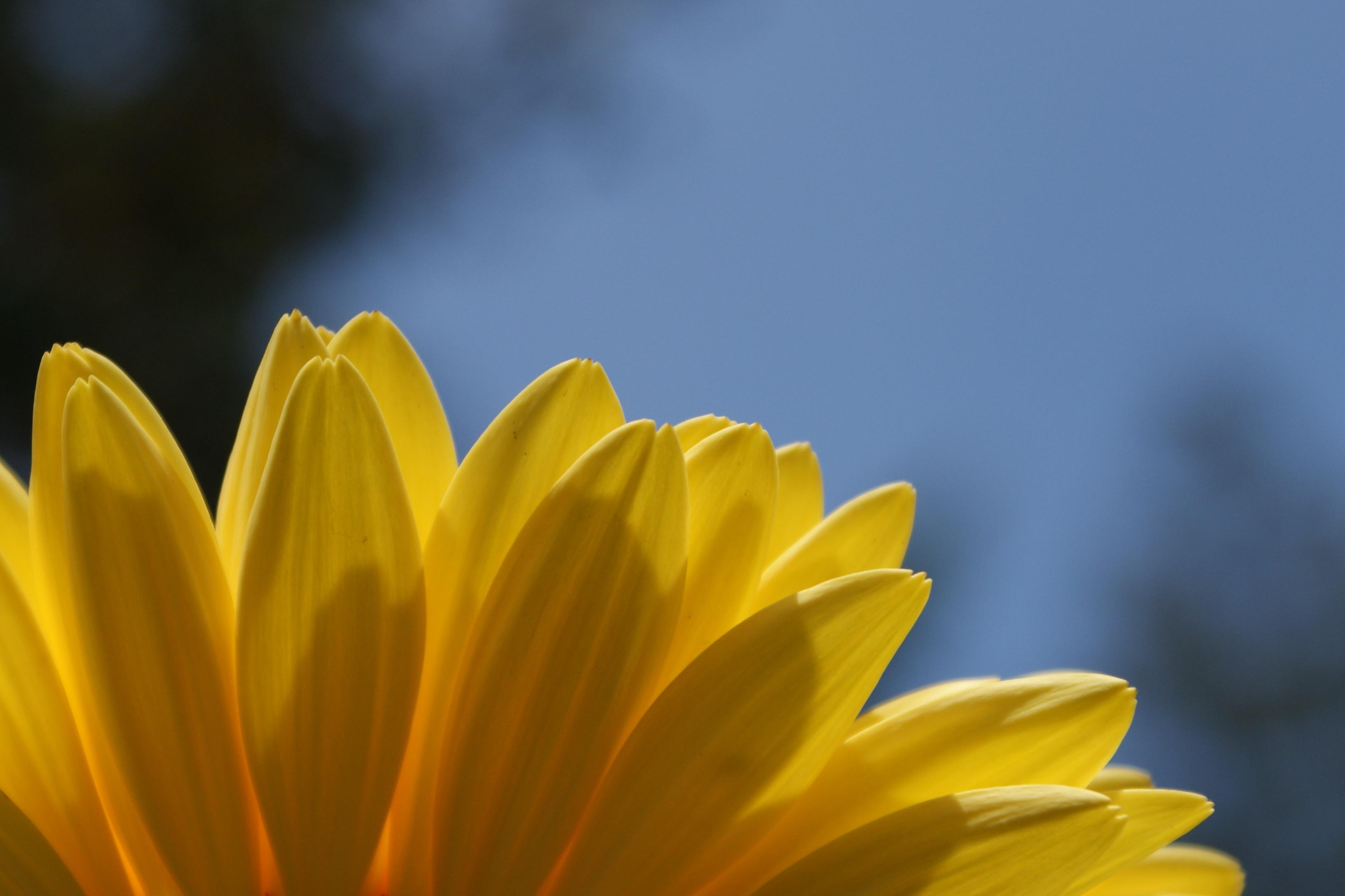 Free Images : nature, blossom, sky, sunlight, leaf, flower, petal ...