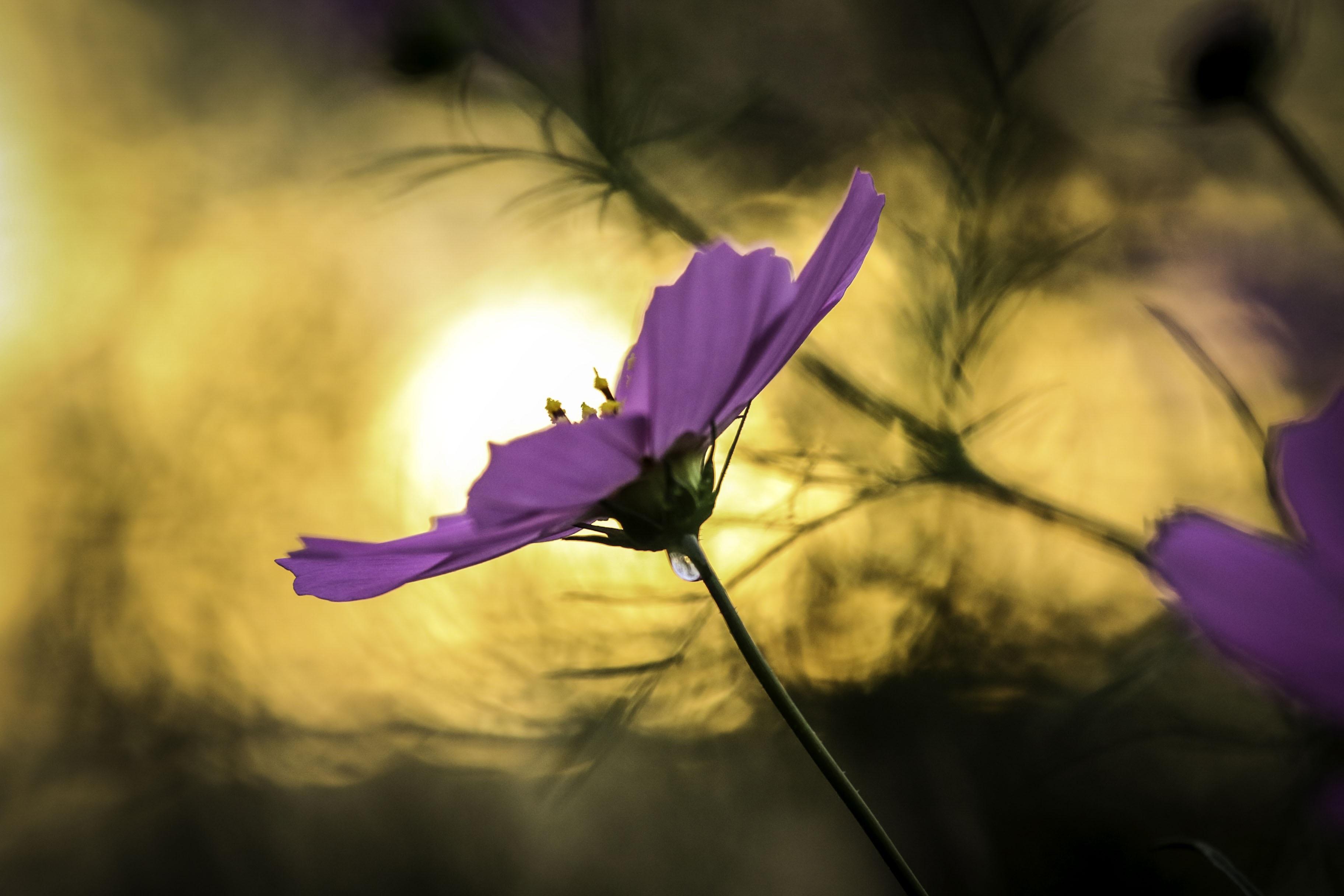 Fotos Gratis Naturaleza Flor Planta Cielo Fotografia Luz De