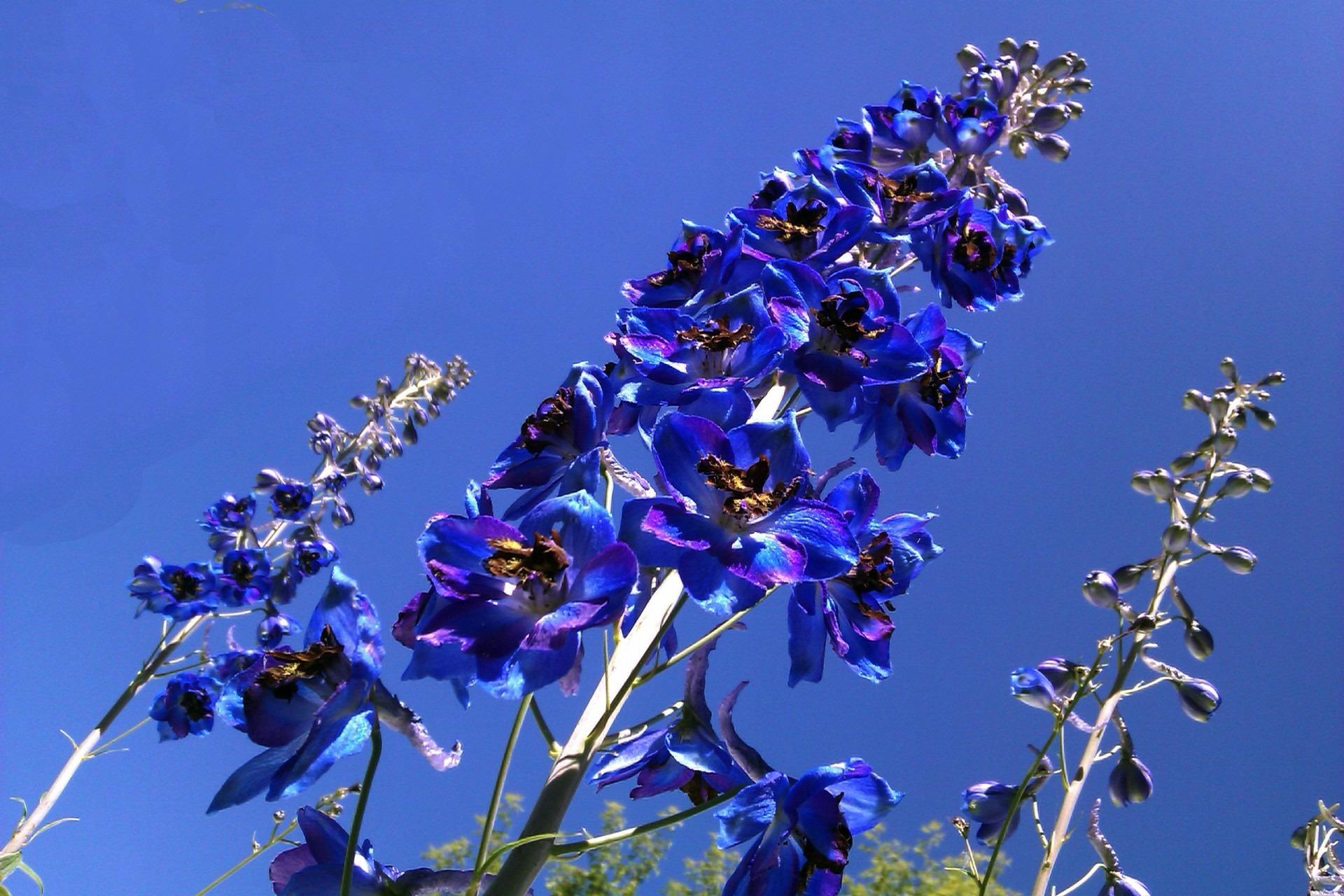 Darmowe Zdjęcia Natura Kwitnąć Niebo Trzon Liść Płatek